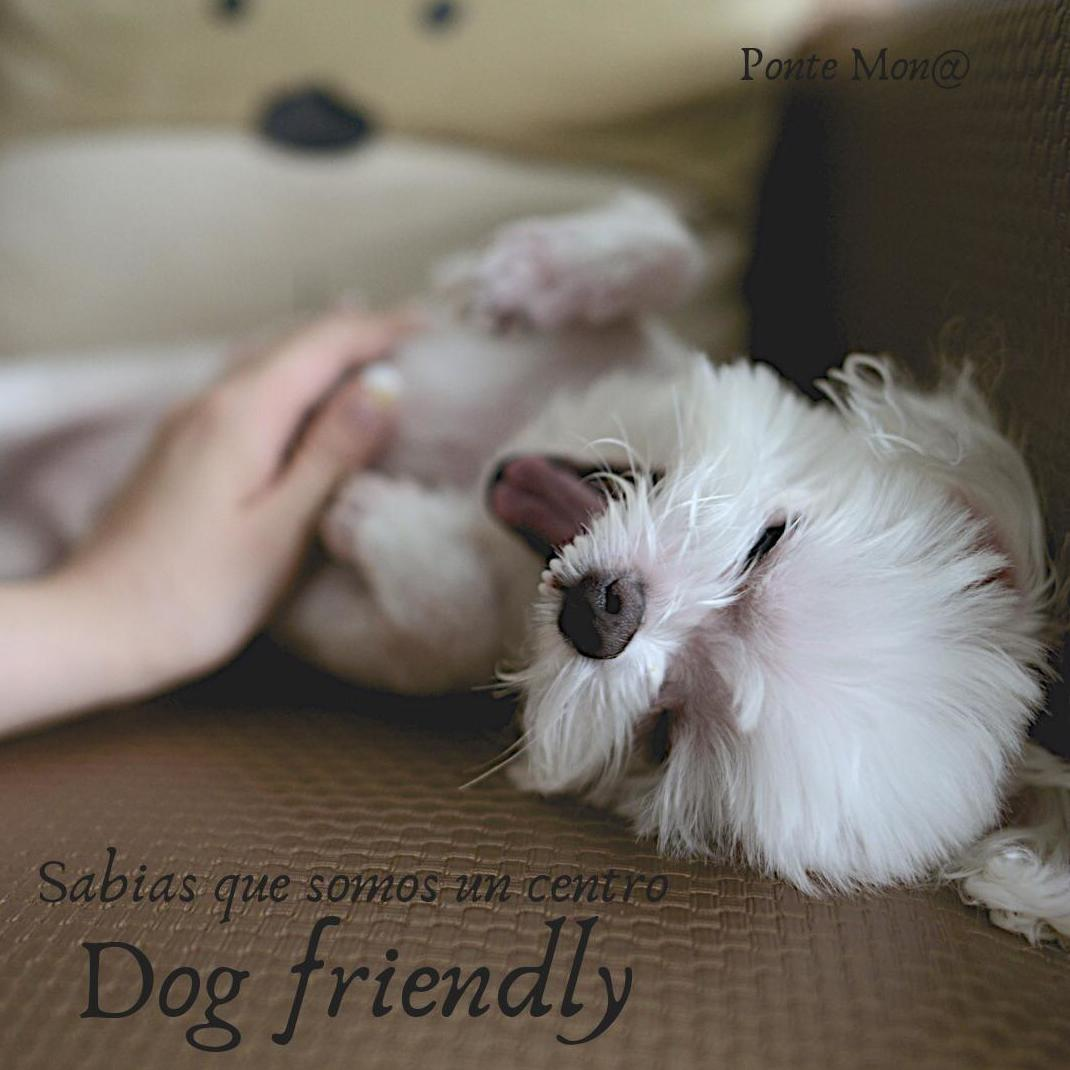 CENTRO DOG FRIENDLY