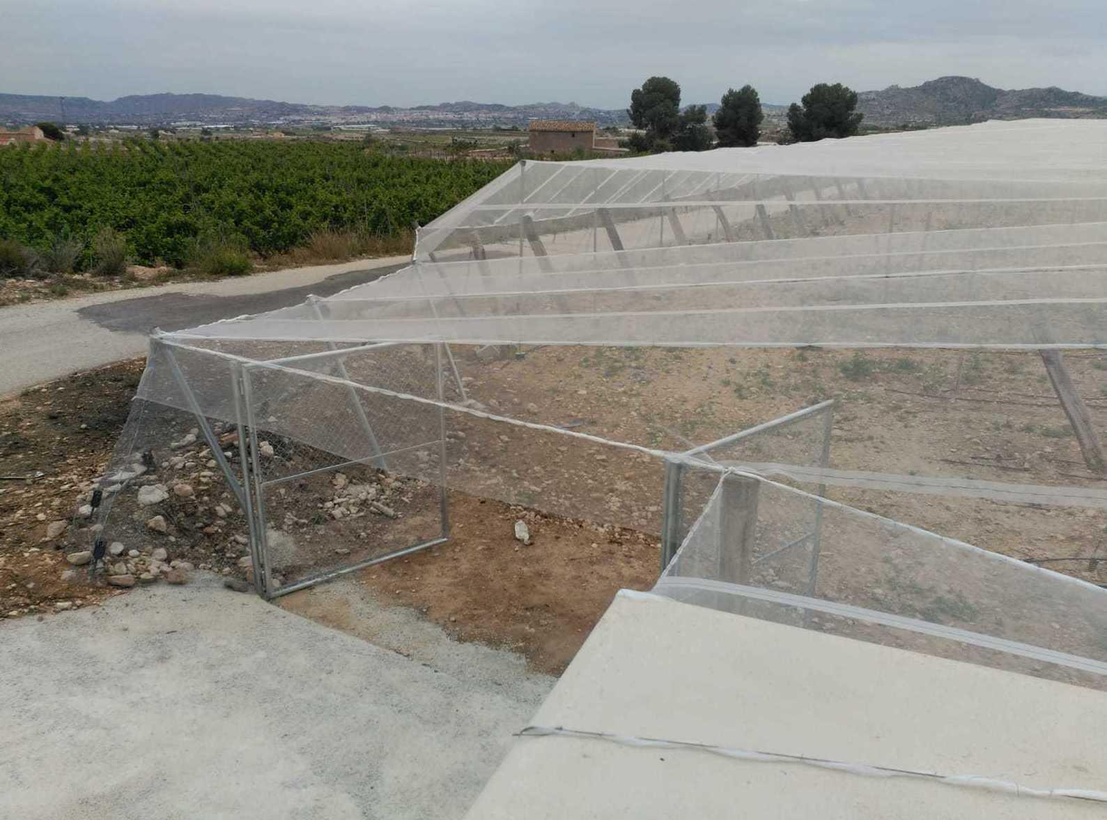 Foto 78 de Infraestructuras y trabajos agrícolas en La Murada – Orihuela   Mantenimiento y Estructuras Agrícolas Mateo e Hijo, S.L.