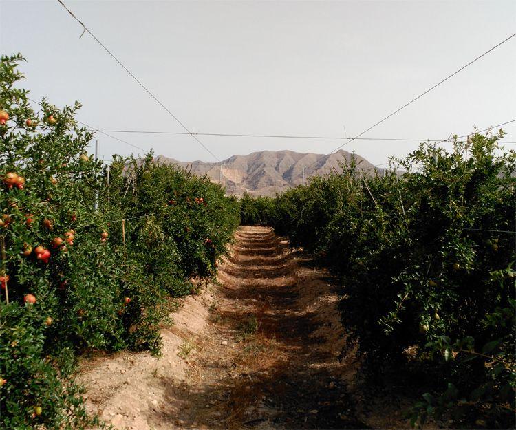 Montaje de infraestructura para la agricultura