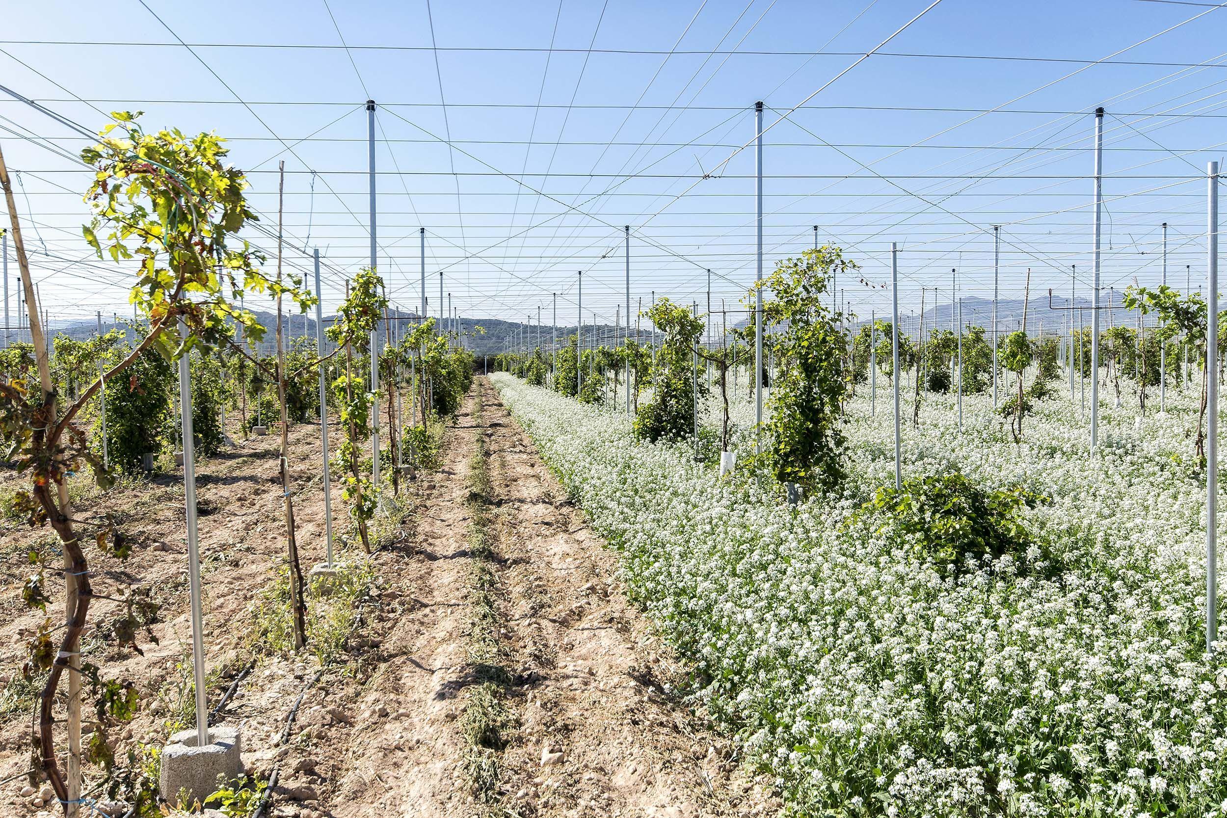 La mejor maquinaria del mercado para el montaje de infraestructura para los cultivos de uvas