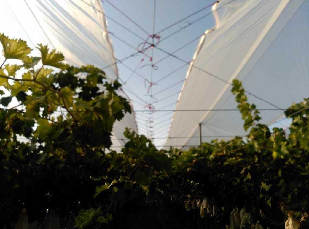 Foto 6 de Infraestructuras y trabajos agrícolas en La Murada – Orihuela | Mantenimiento y Estructuras Agrícolas Mateo e Hijo, S.L.