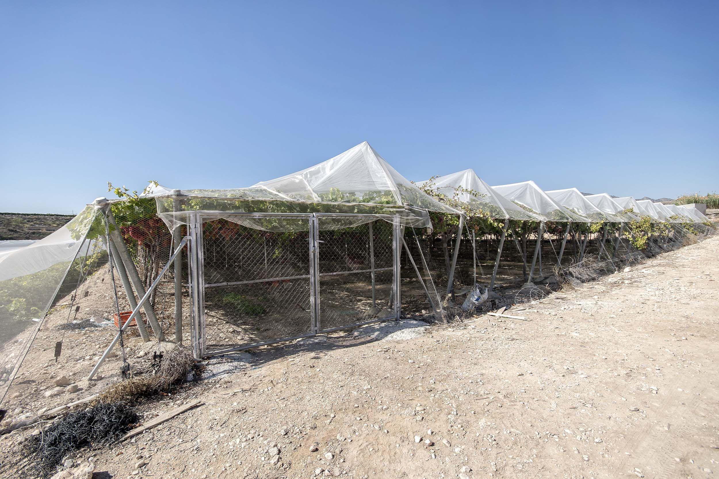 Invernaderos para la mejora de la producción hortofrutícola
