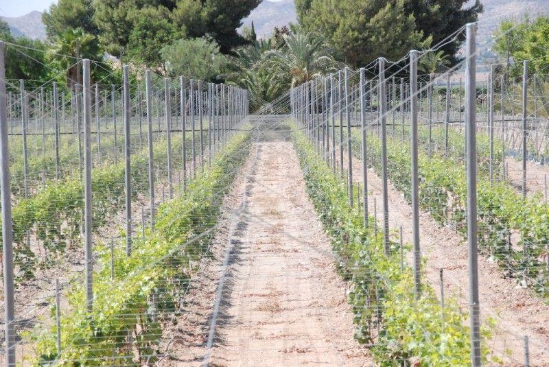 Trabajos agrícolas: Productos y servicios de Mantenimiento y Estructuras Agrícolas Mateo e Hijo, S.L.