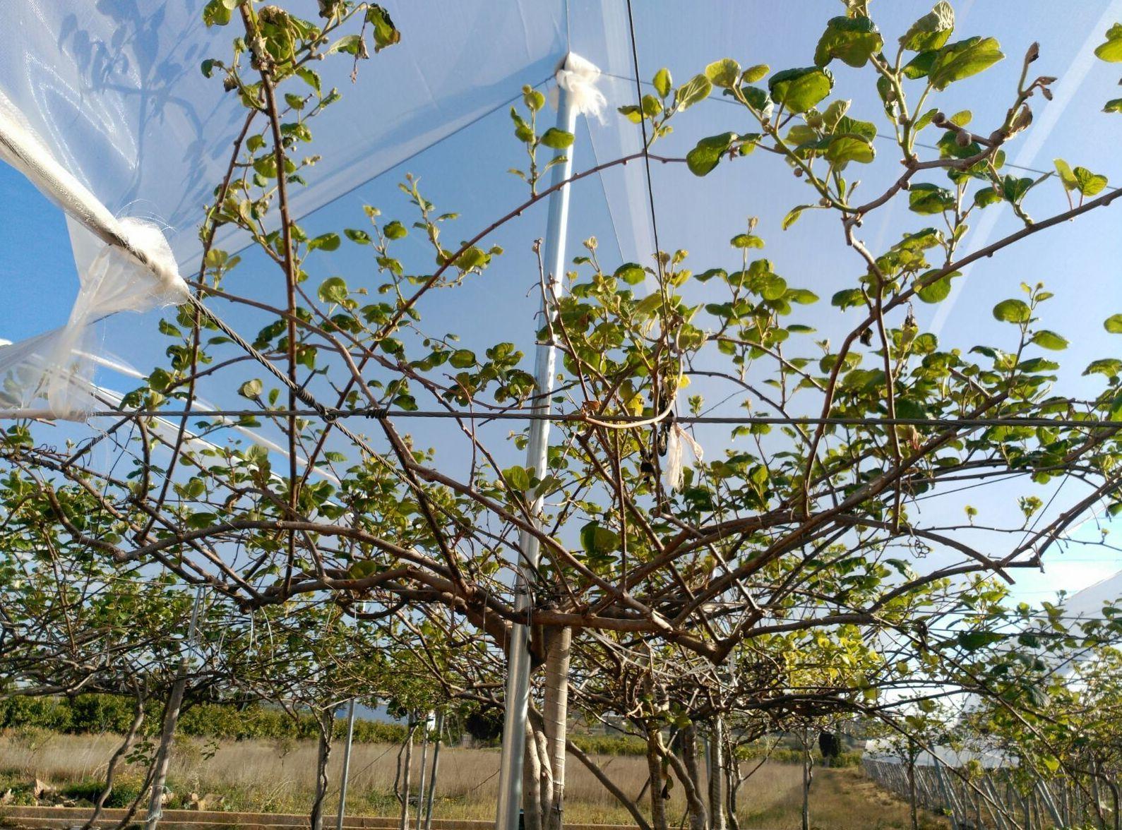 Foto 32 de Infraestructuras y trabajos agrícolas en La Murada – Orihuela | Mantenimiento y Estructuras Agrícolas Mateo e Hijo, S.L.