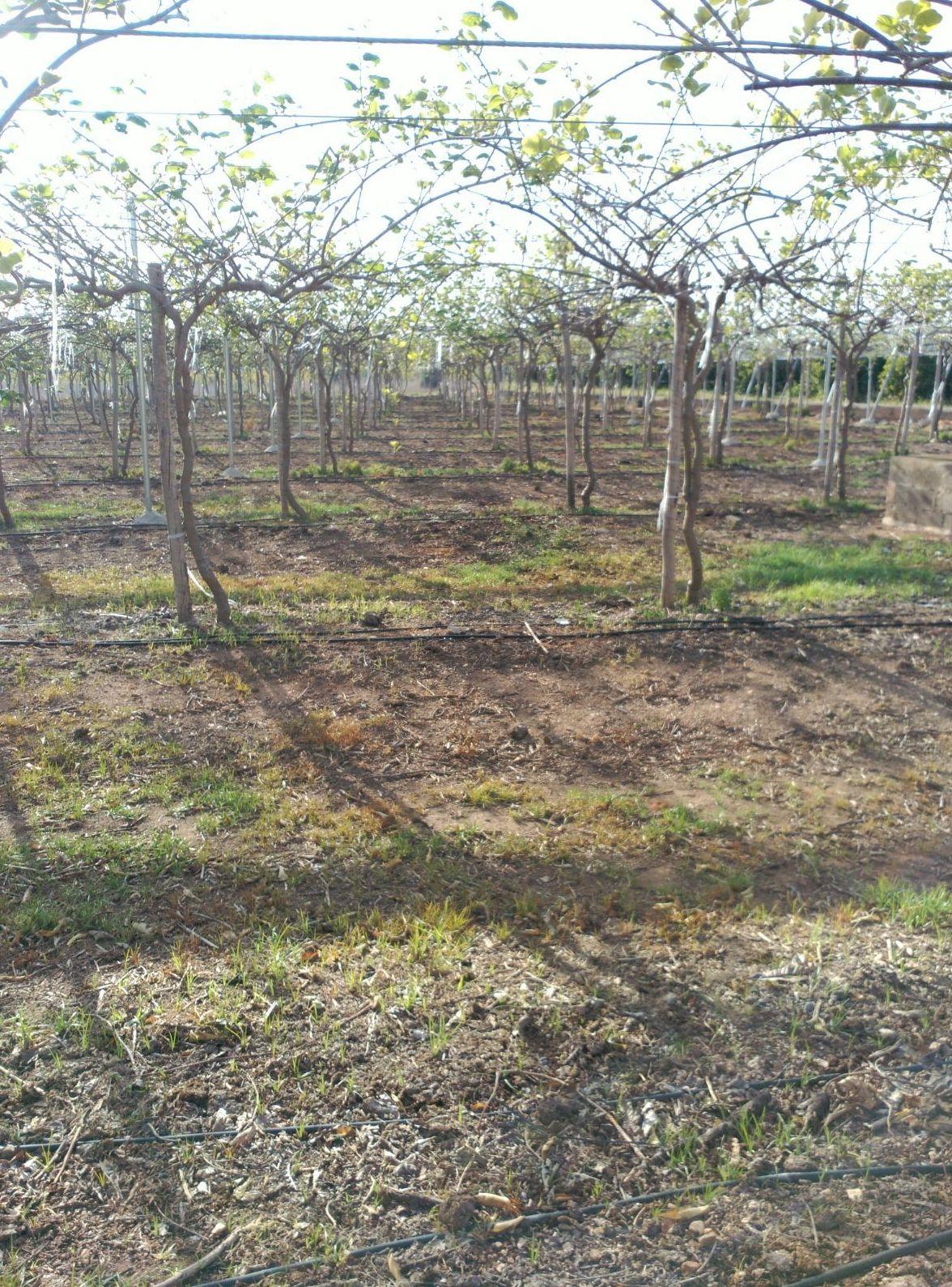 Foto 30 de Infraestructuras y trabajos agrícolas en La Murada – Orihuela   Mantenimiento y Estructuras Agrícolas Mateo e Hijo, S.L.