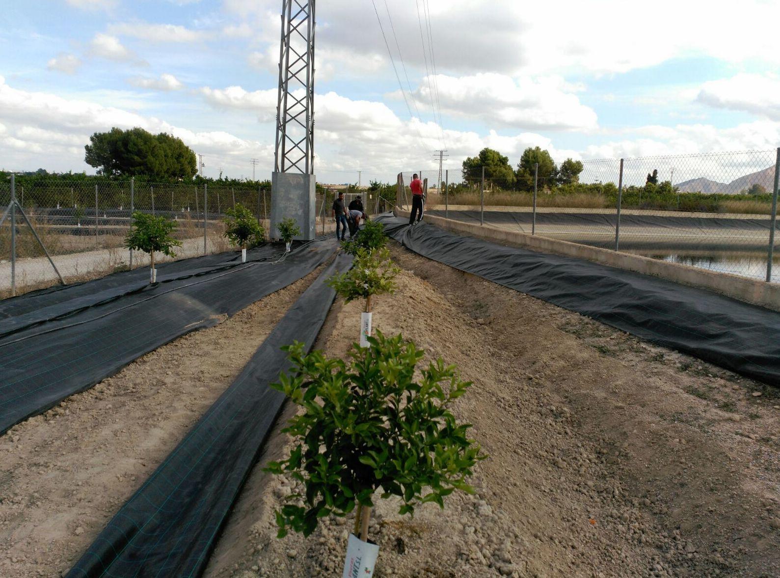 Foto 59 de Infraestructuras y trabajos agrícolas en La Murada – Orihuela   Mantenimiento y Estructuras Agrícolas Mateo e Hijo, S.L.