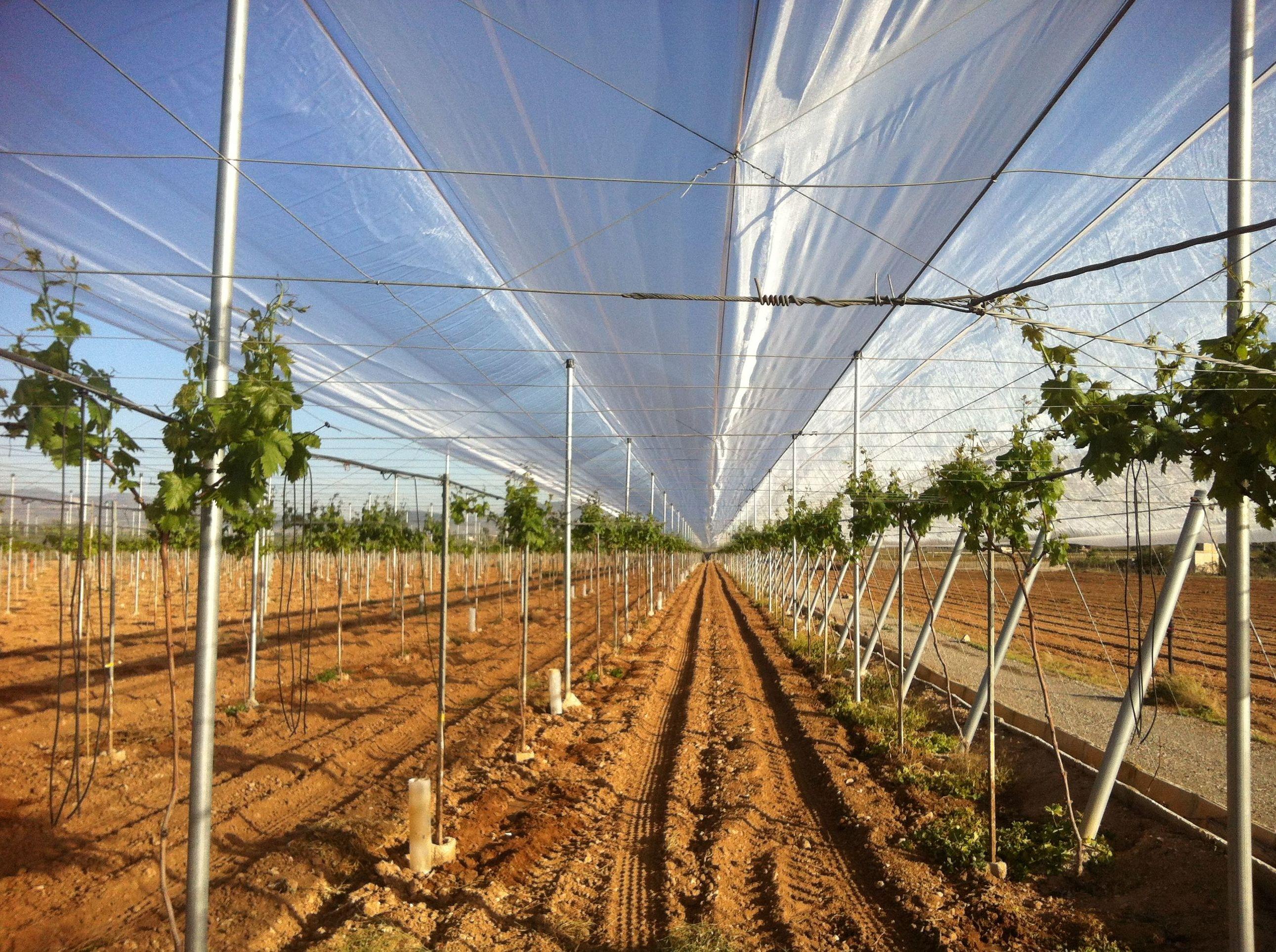Foto 86 de Infraestructuras y trabajos agrícolas en La Murada – Orihuela | Mantenimiento y Estructuras Agrícolas Mateo e Hijo, S.L.