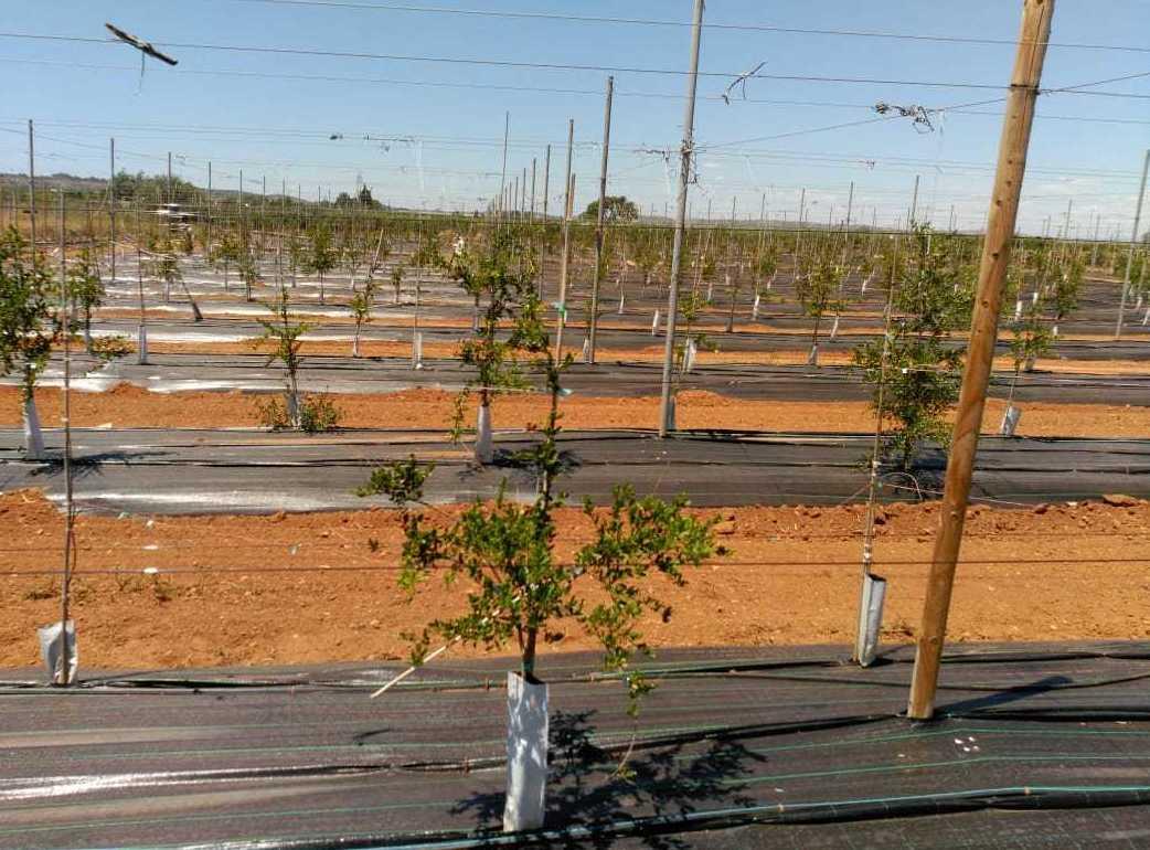 Foto 17 de Infraestructuras y trabajos agrícolas en La Murada – Orihuela | Mantenimiento y Estructuras Agrícolas Mateo e Hijo, S.L.