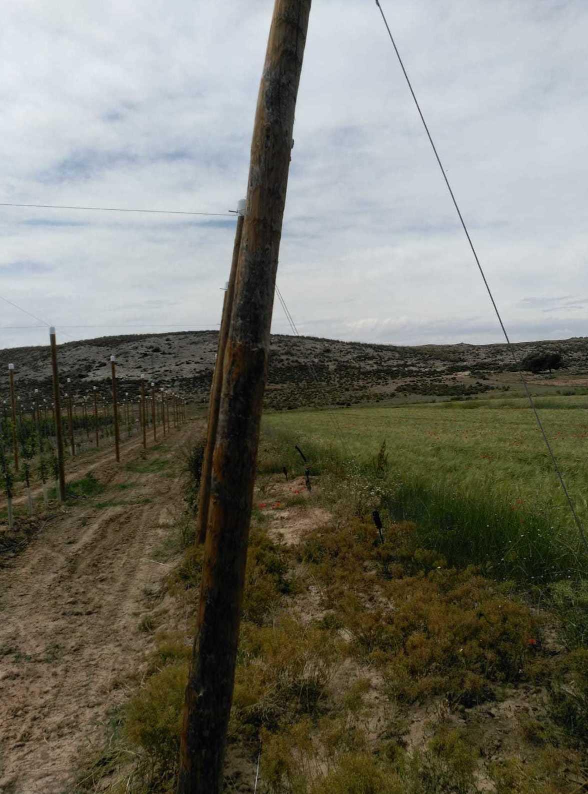 Foto 44 de Infraestructuras y trabajos agrícolas en La Murada – Orihuela | Mantenimiento y Estructuras Agrícolas Mateo e Hijo, S.L.