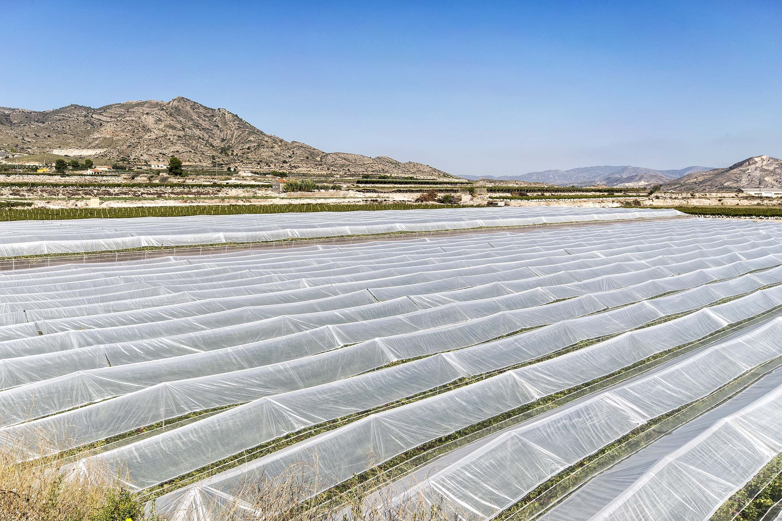 Mantenimiento de invernaderos en Alicante