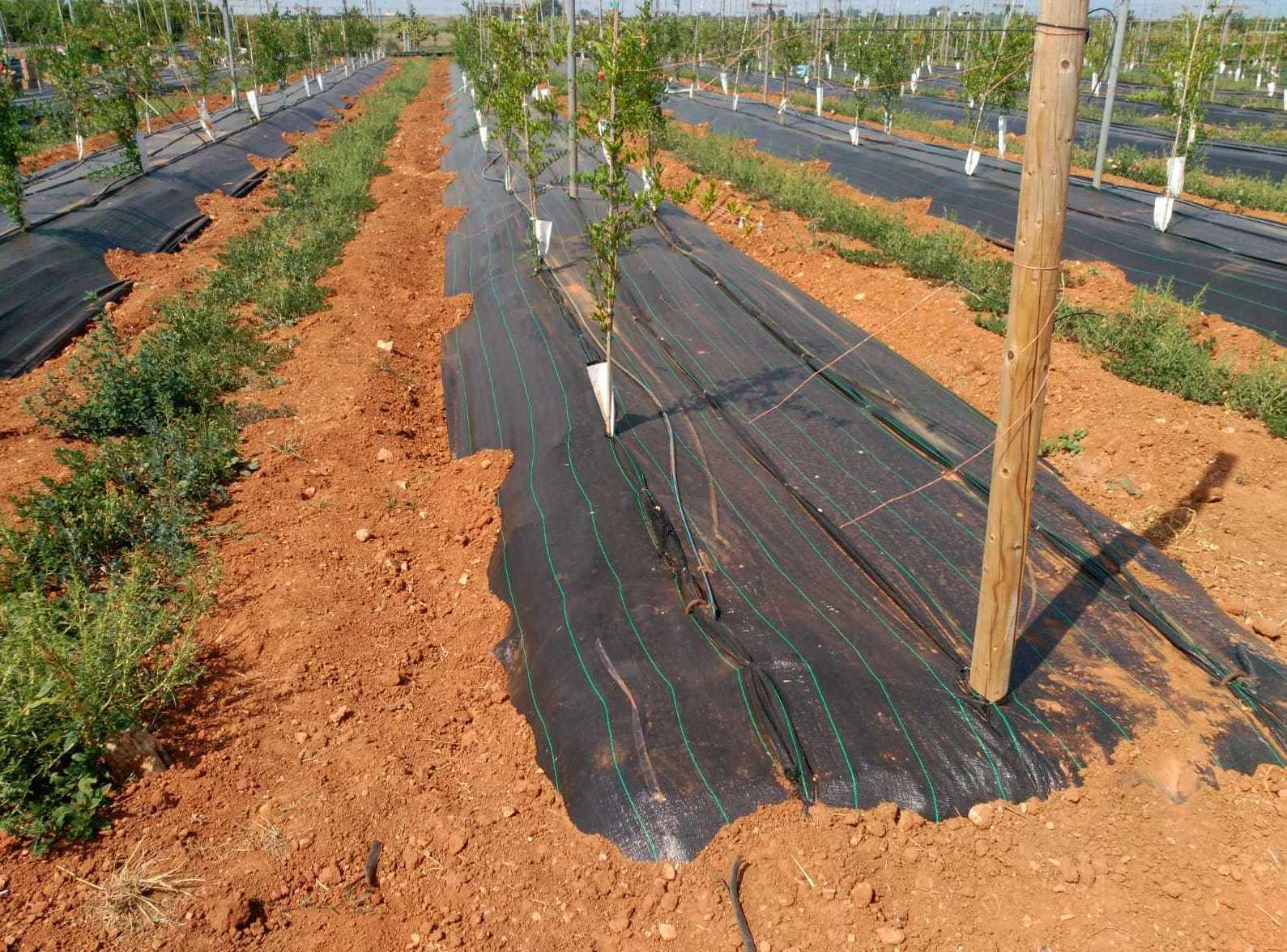 Foto 42 de Infraestructuras y trabajos agrícolas en La Murada – Orihuela | Mantenimiento y Estructuras Agrícolas Mateo e Hijo, S.L.