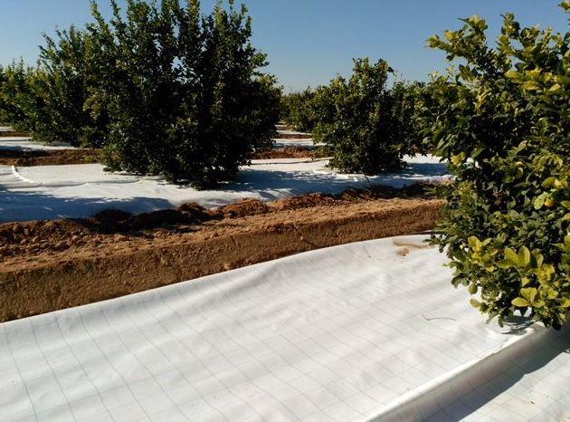 Foto 39 de Infraestructuras y trabajos agrícolas en La Murada – Orihuela | Mantenimiento y Estructuras Agrícolas Mateo e Hijo, S.L.