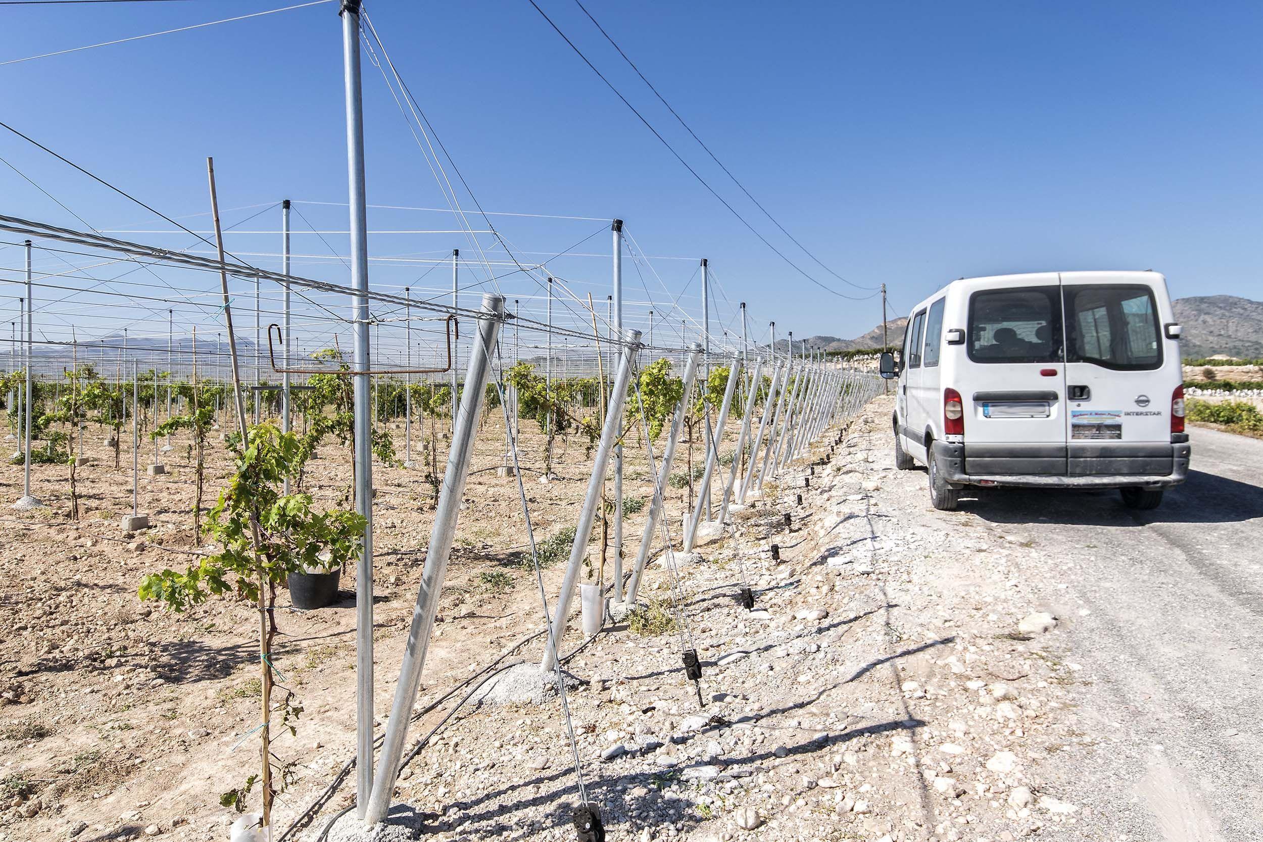 Montaje de infraestructuras para uvas en Alicante