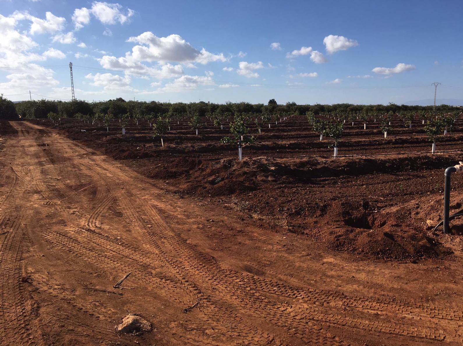 Foto 4 de Infraestructuras y trabajos agrícolas en La Murada – Orihuela | Mantenimiento y Estructuras Agrícolas Mateo e Hijo, S.L.
