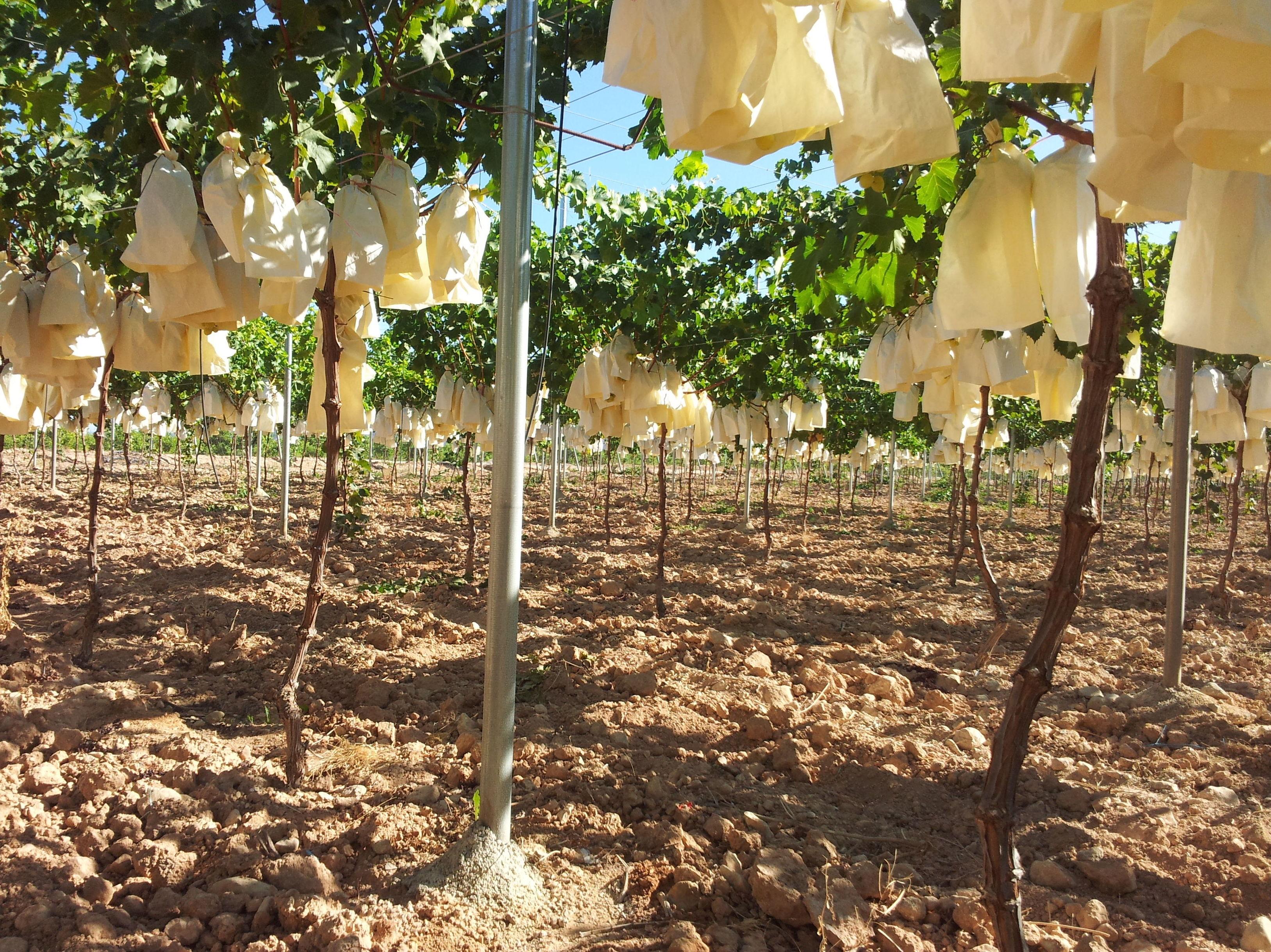Foto 109 de Infraestructuras y trabajos agrícolas en La Murada – Orihuela | Mantenimiento y Estructuras Agrícolas Mateo e Hijo, S.L.