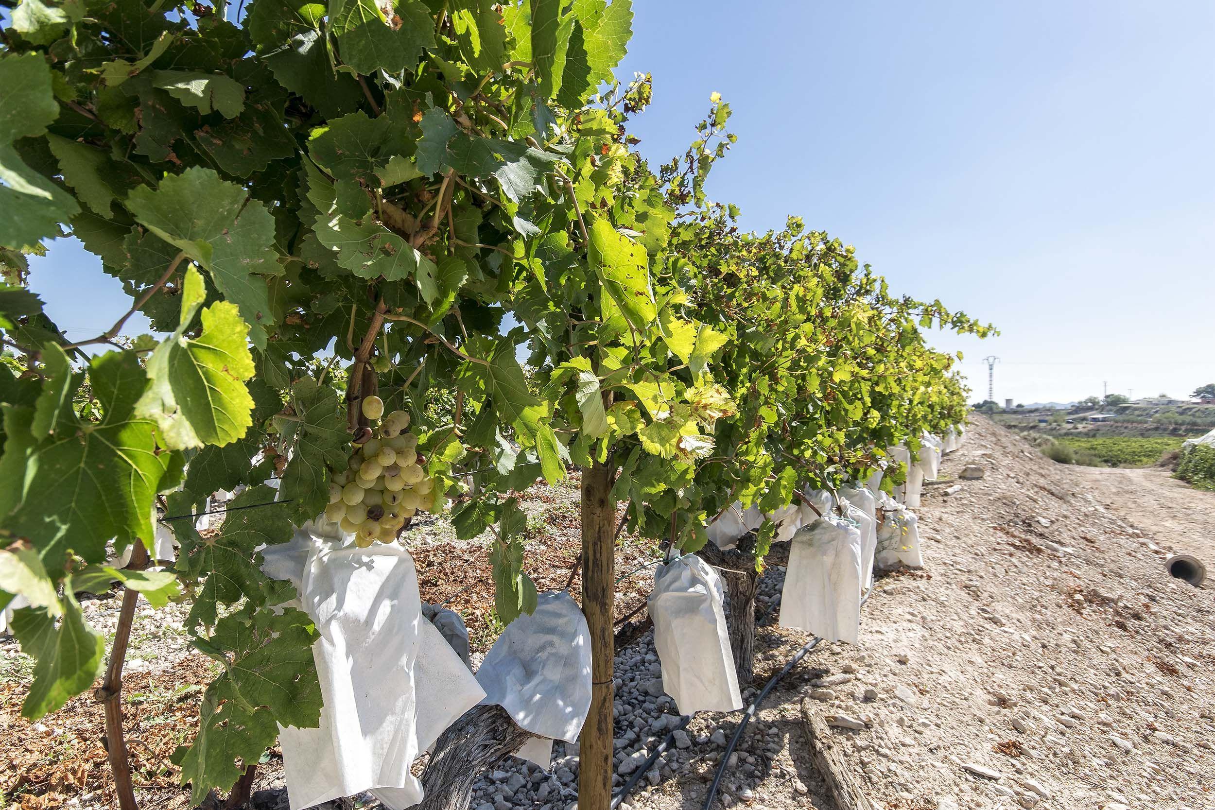 Trabajos agrícolas en Alicante