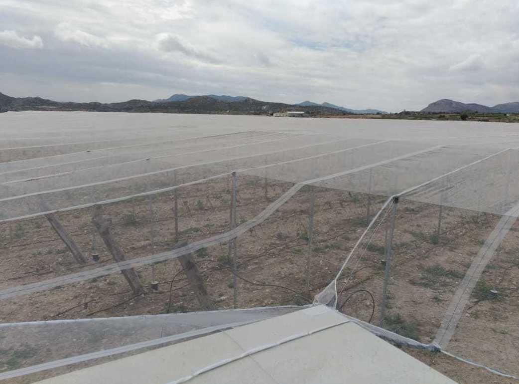 Foto 48 de Infraestructuras y trabajos agrícolas en La Murada – Orihuela | Mantenimiento y Estructuras Agrícolas Mateo e Hijo, S.L.