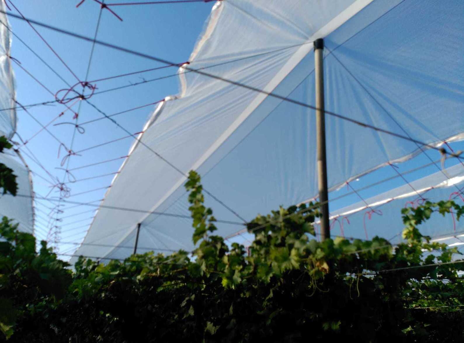 Foto 20 de Infraestructuras y trabajos agrícolas en La Murada – Orihuela | Mantenimiento y Estructuras Agrícolas Mateo e Hijo, S.L.