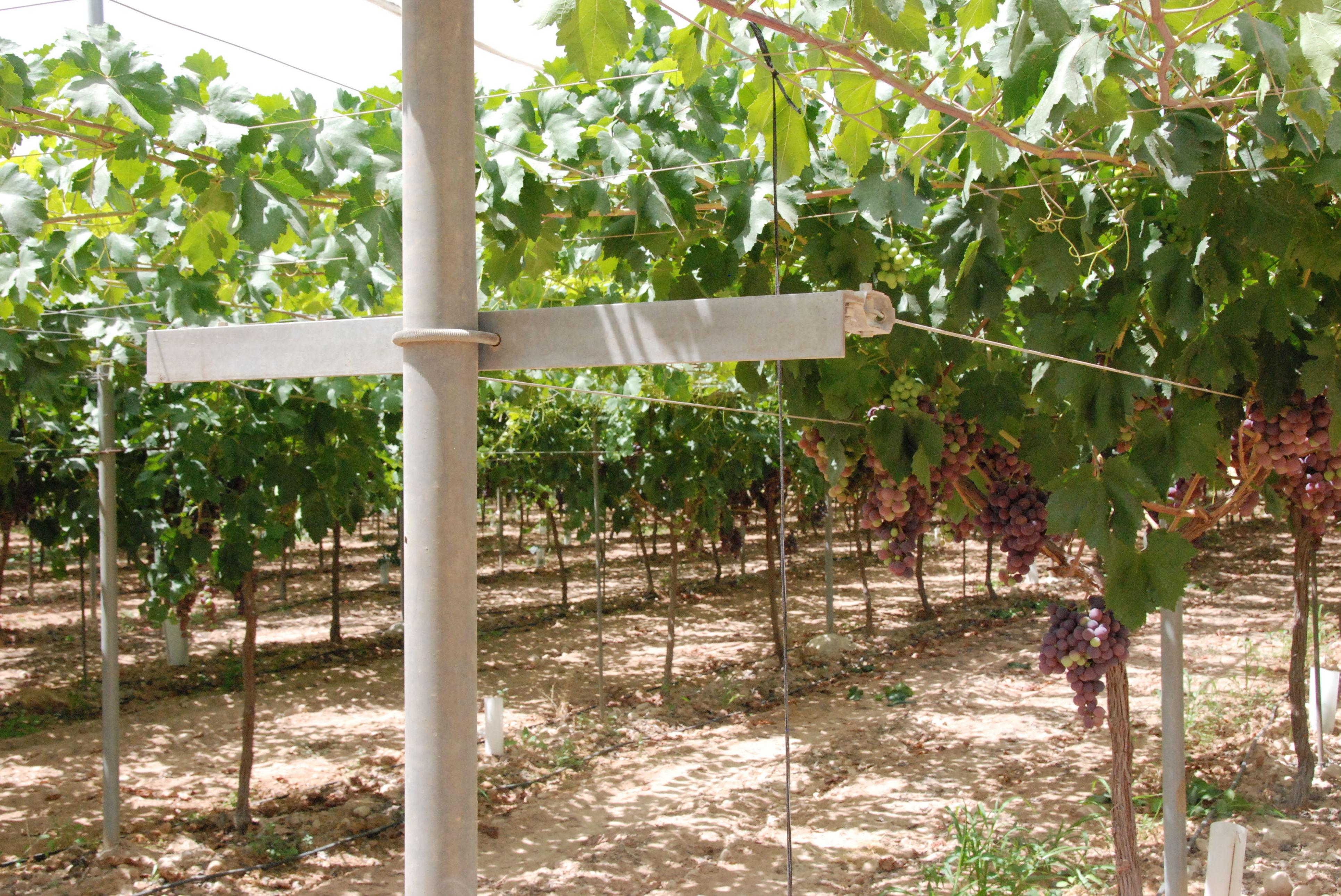 Foto 107 de Infraestructuras y trabajos agrícolas en La Murada – Orihuela | Mantenimiento y Estructuras Agrícolas Mateo e Hijo, S.L.