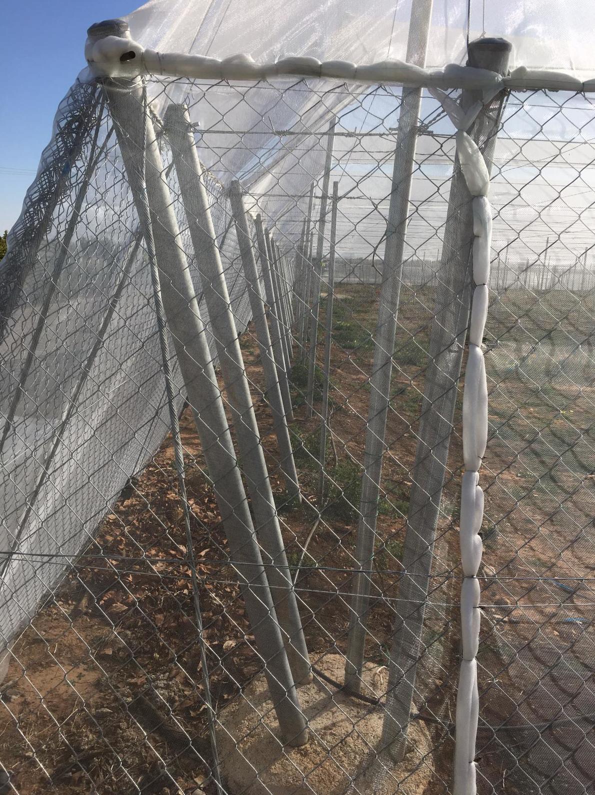 Foto 22 de Infraestructuras y trabajos agrícolas en La Murada – Orihuela | Mantenimiento y Estructuras Agrícolas Mateo e Hijo, S.L.