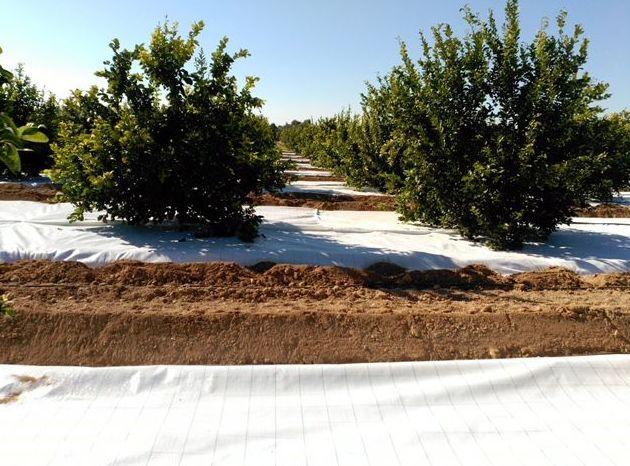 Foto 67 de Infraestructuras y trabajos agrícolas en La Murada – Orihuela | Mantenimiento y Estructuras Agrícolas Mateo e Hijo, S.L.