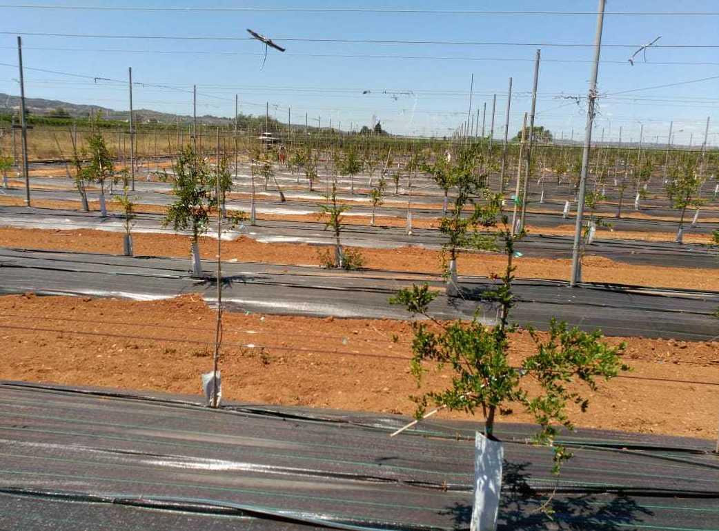 Picture 16 of Infraestructuras y trabajos agrícolas in La Murada – Orihuela   Mantenimiento y Estructuras Agrícolas Mateo e Hijo, S.L.