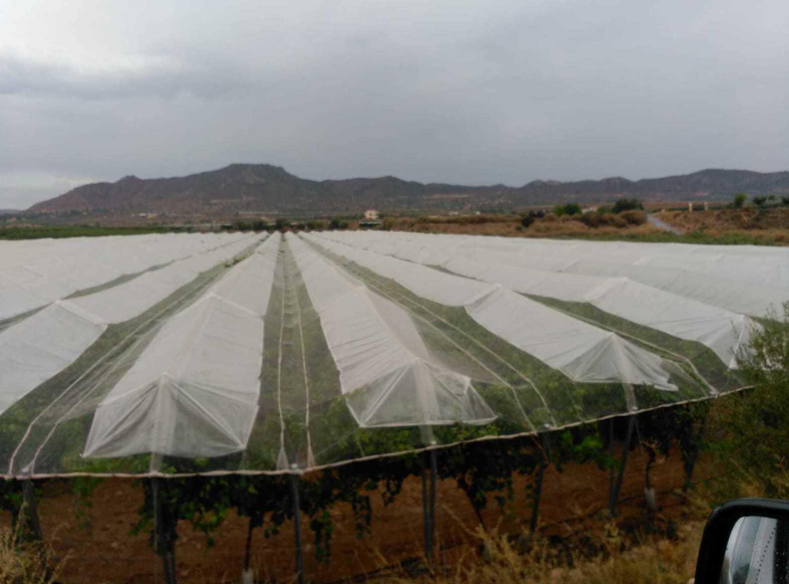 Foto 7 de Infraestructuras y trabajos agrícolas en La Murada – Orihuela | Mantenimiento y Estructuras Agrícolas Mateo e Hijo, S.L.