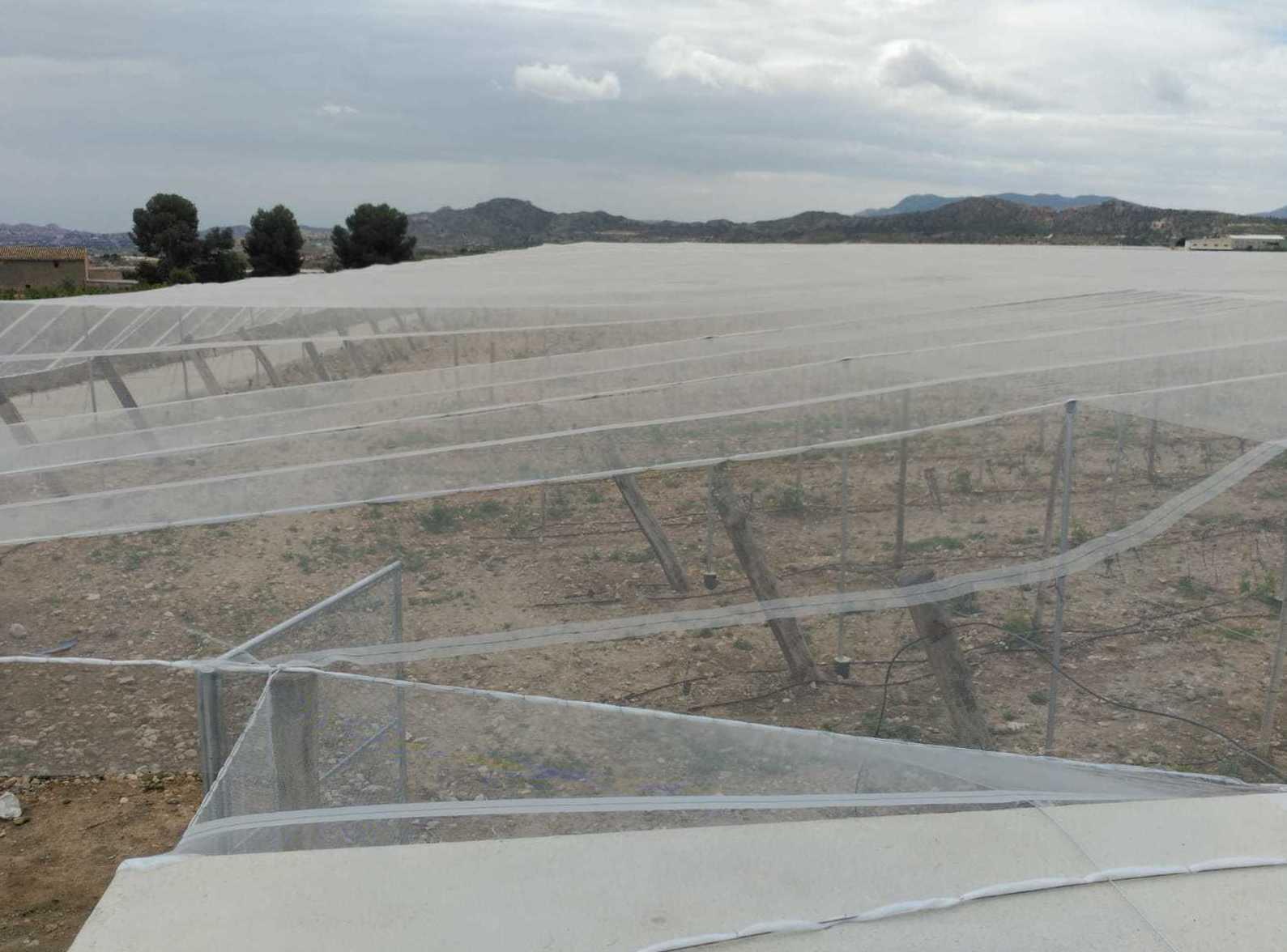 Foto 47 de Infraestructuras y trabajos agrícolas en La Murada – Orihuela | Mantenimiento y Estructuras Agrícolas Mateo e Hijo, S.L.