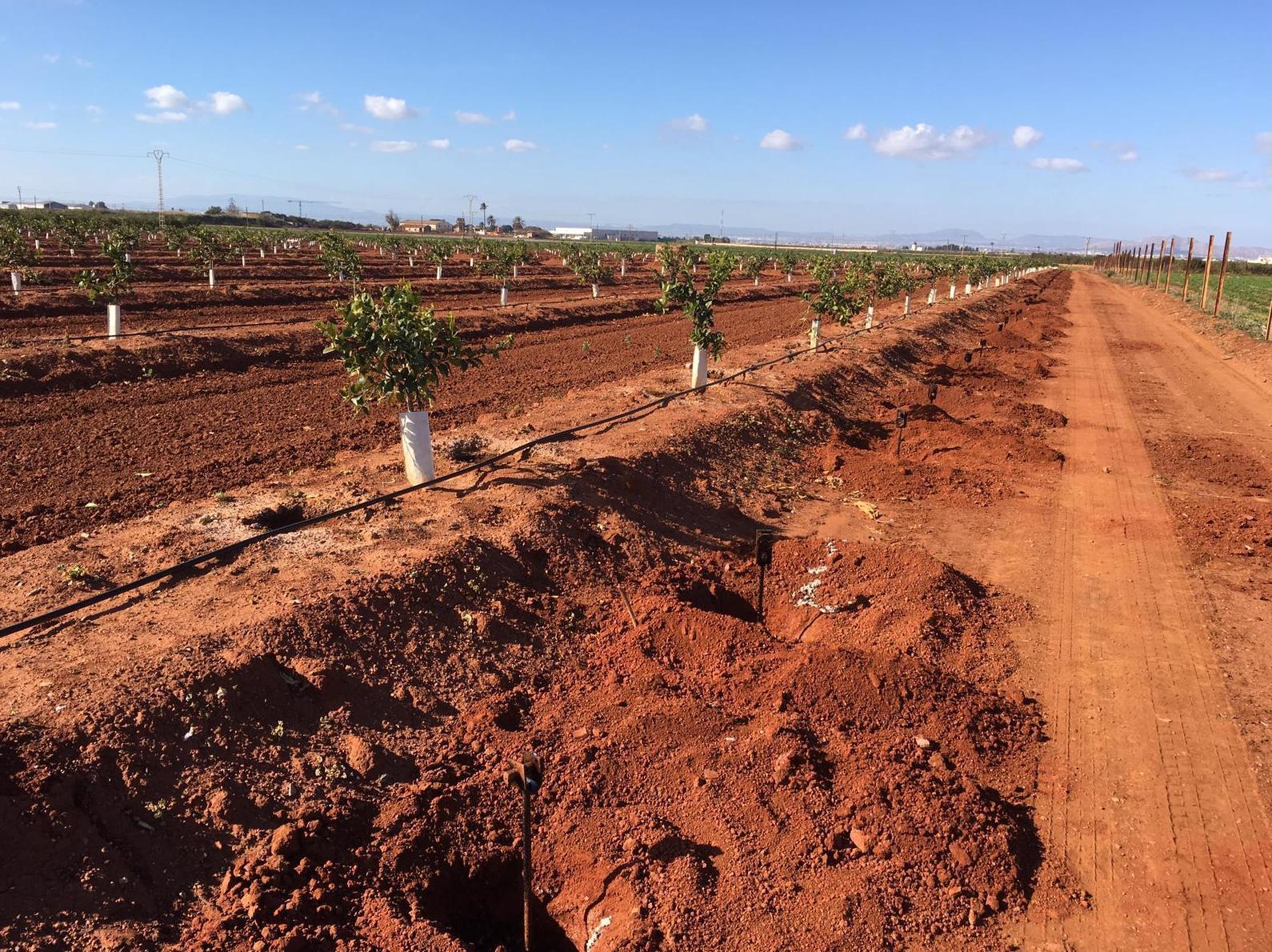 Foto 3 de Infraestructuras y trabajos agrícolas en La Murada – Orihuela | Mantenimiento y Estructuras Agrícolas Mateo e Hijo, S.L.