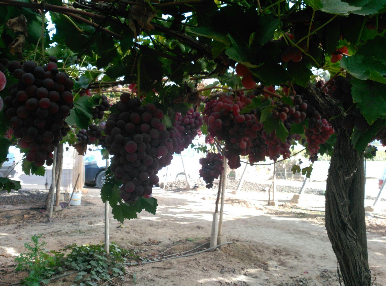 Foto 104 de Infraestructuras y trabajos agrícolas en La Murada – Orihuela   Mantenimiento y Estructuras Agrícolas Mateo e Hijo, S.L.