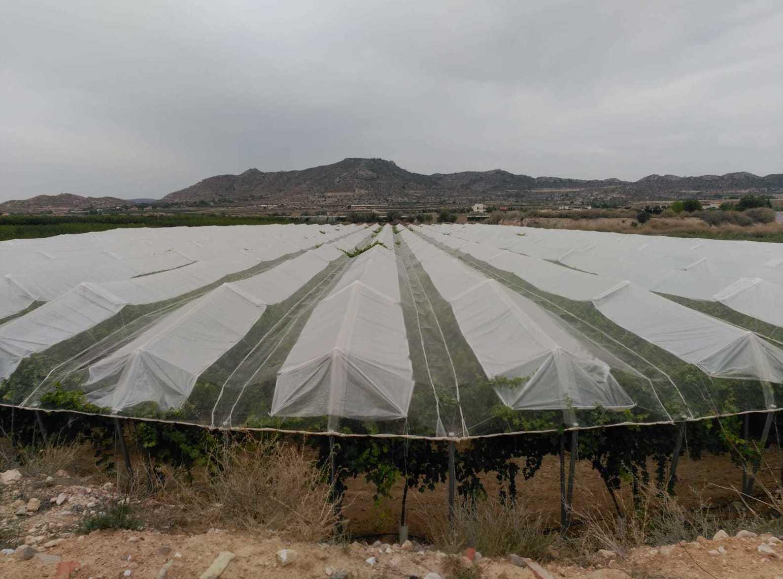 Foto 8 de Infraestructuras y trabajos agrícolas en La Murada – Orihuela   Mantenimiento y Estructuras Agrícolas Mateo e Hijo, S.L.