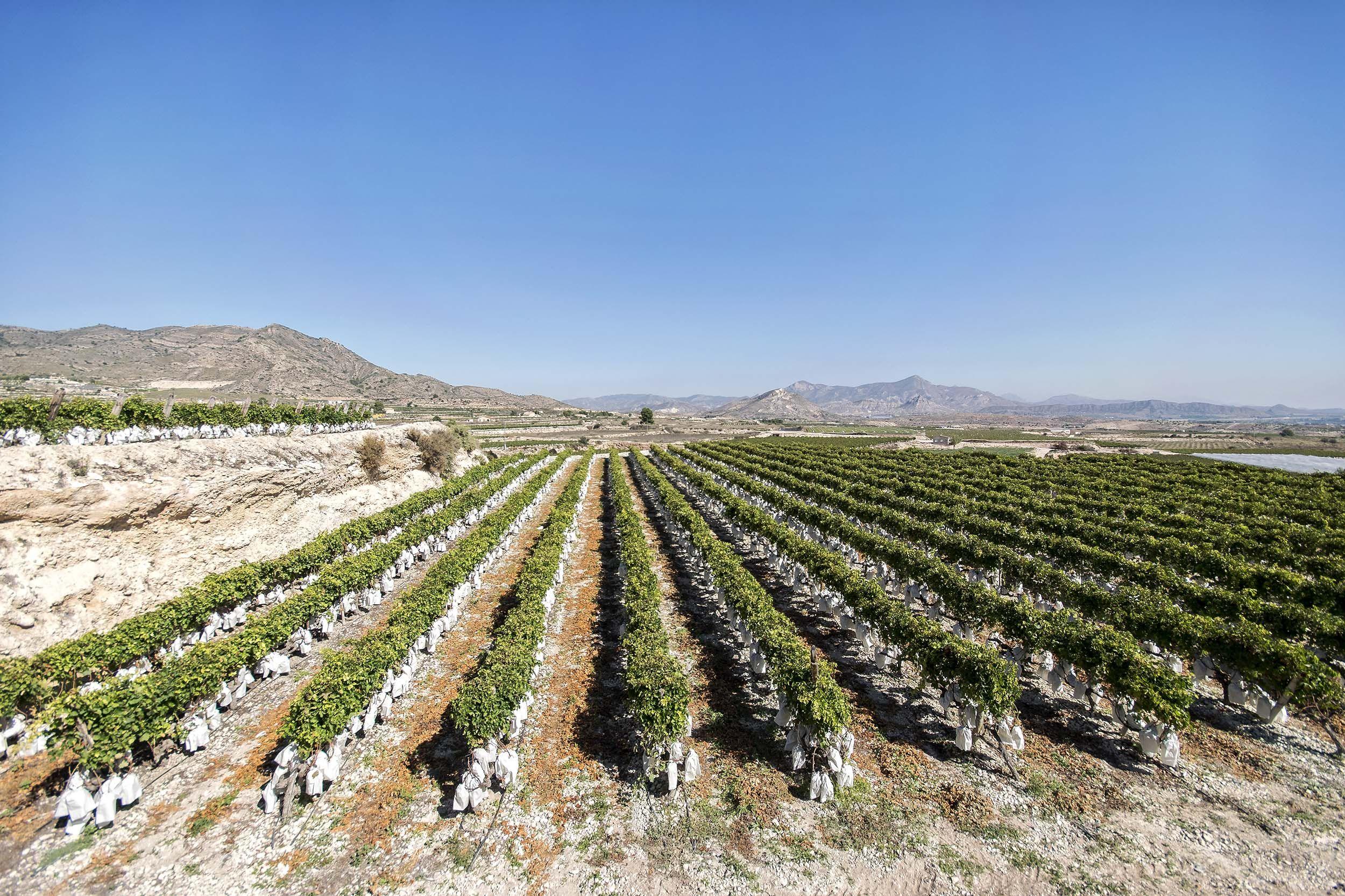 Montaje de todo tipo de infraestructuras en cultivos de uvas