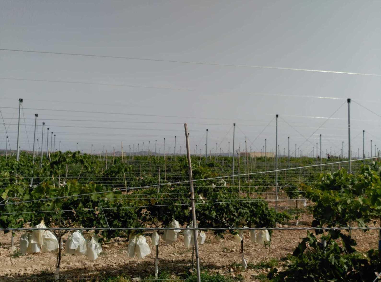 Foto 5 de Infraestructuras y trabajos agrícolas en La Murada – Orihuela | Mantenimiento y Estructuras Agrícolas Mateo e Hijo, S.L.