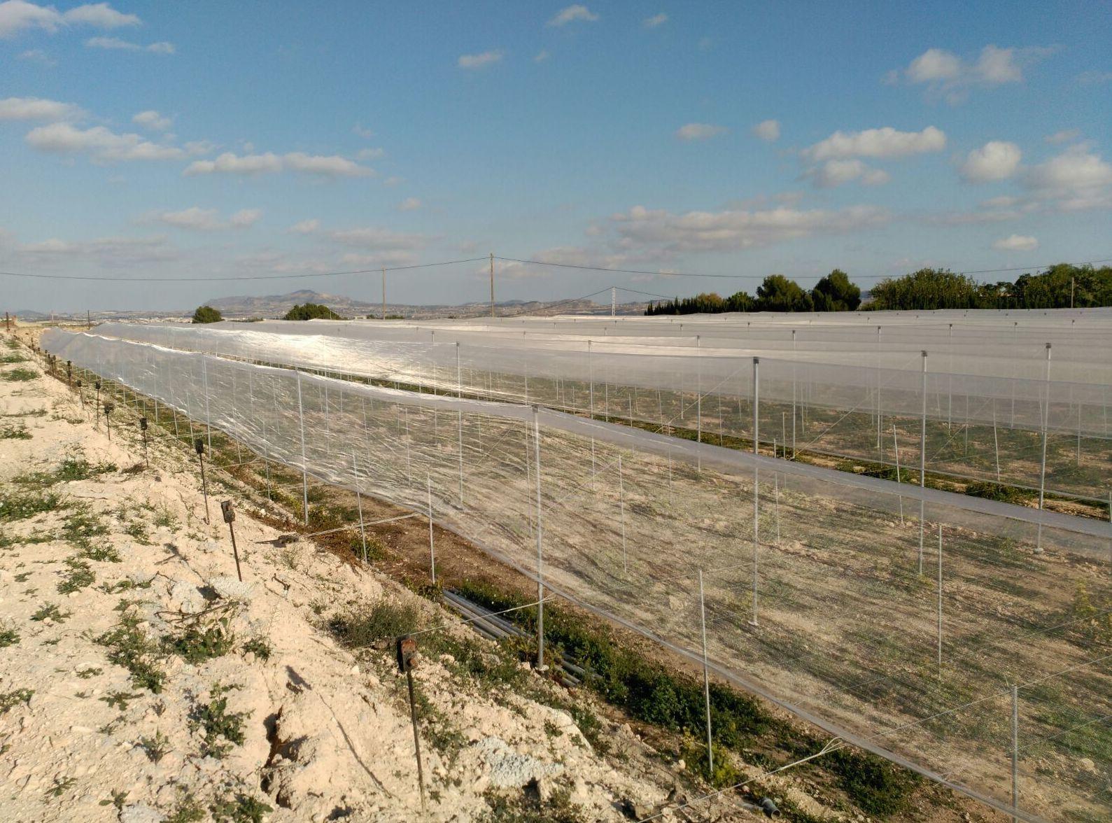 Foto 58 de Infraestructuras y trabajos agrícolas en La Murada – Orihuela | Mantenimiento y Estructuras Agrícolas Mateo e Hijo, S.L.