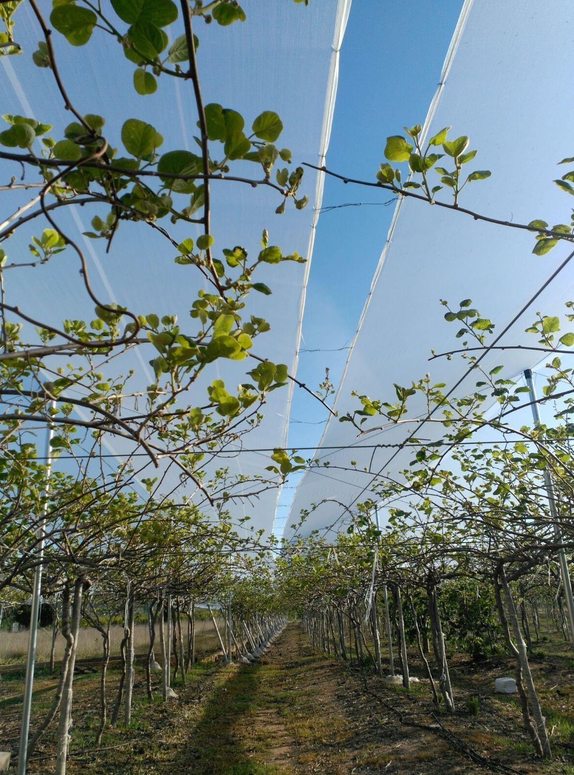 Foto 33 de Infraestructuras y trabajos agrícolas en La Murada – Orihuela | Mantenimiento y Estructuras Agrícolas Mateo e Hijo, S.L.