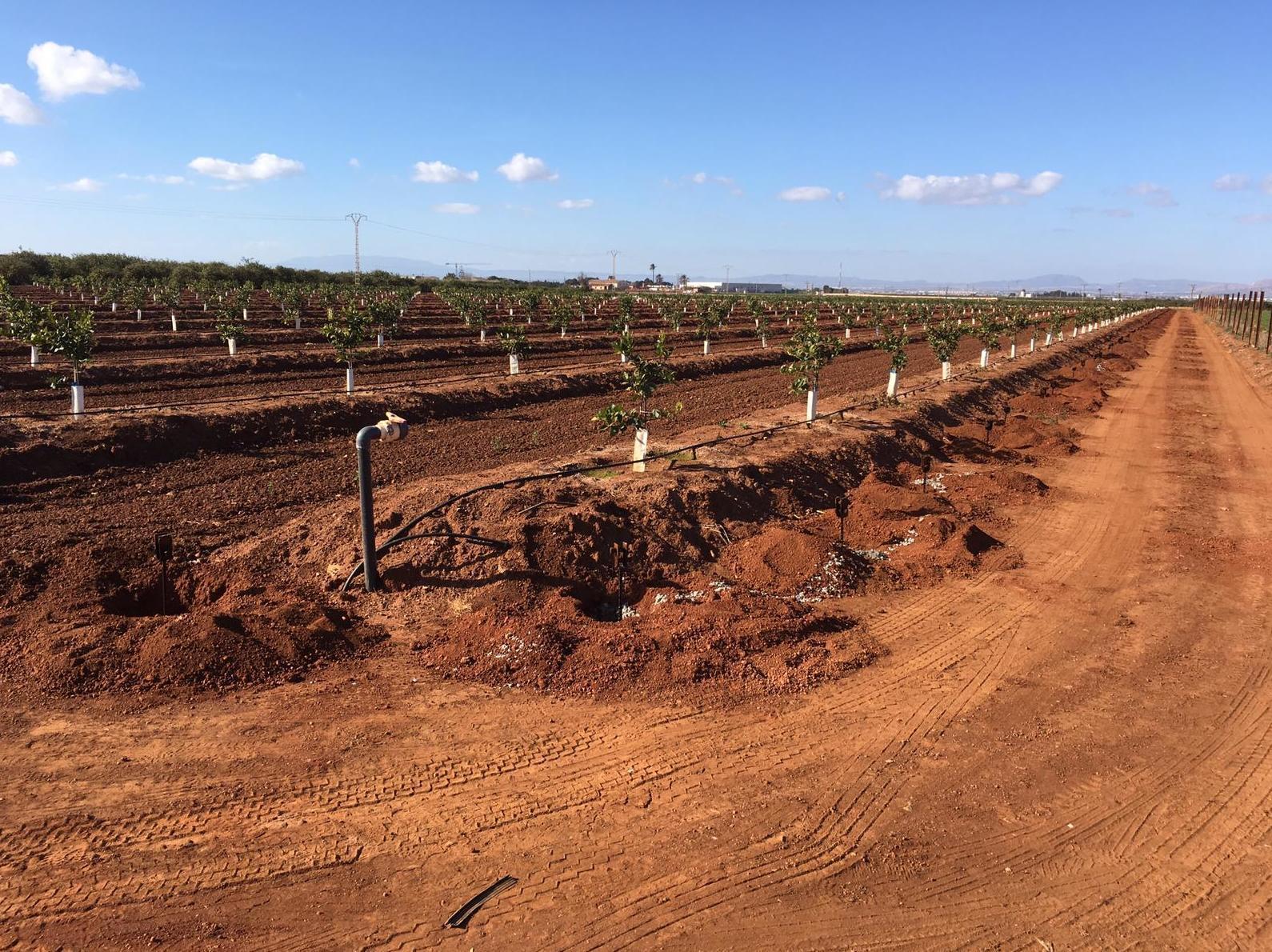 Foto 1 de Infraestructuras y trabajos agrícolas en La Murada – Orihuela | Mantenimiento y Estructuras Agrícolas Mateo e Hijo, S.L.