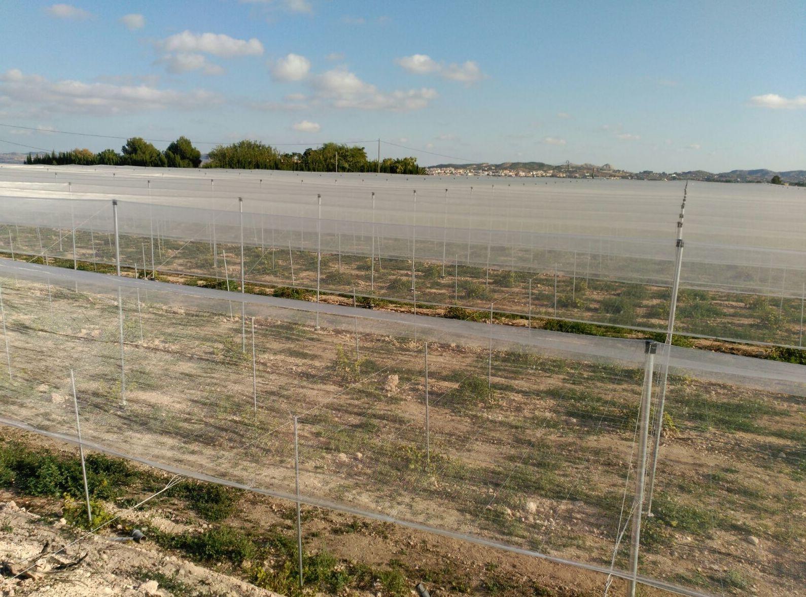Foto 56 de Infraestructuras y trabajos agrícolas en La Murada – Orihuela | Mantenimiento y Estructuras Agrícolas Mateo e Hijo, S.L.