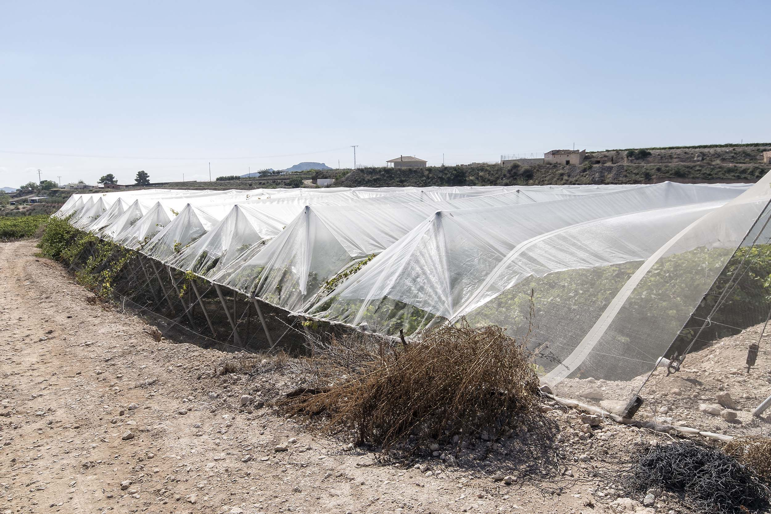 Colocación de plásticos para la construcción de invernaderos en Alicante