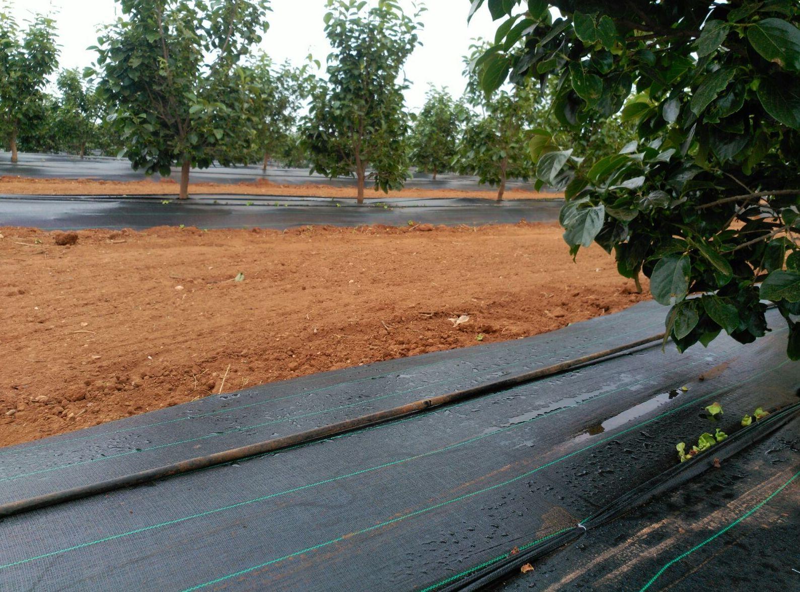Malla antihierba en frutales. Mantiene la humedad del terreno.