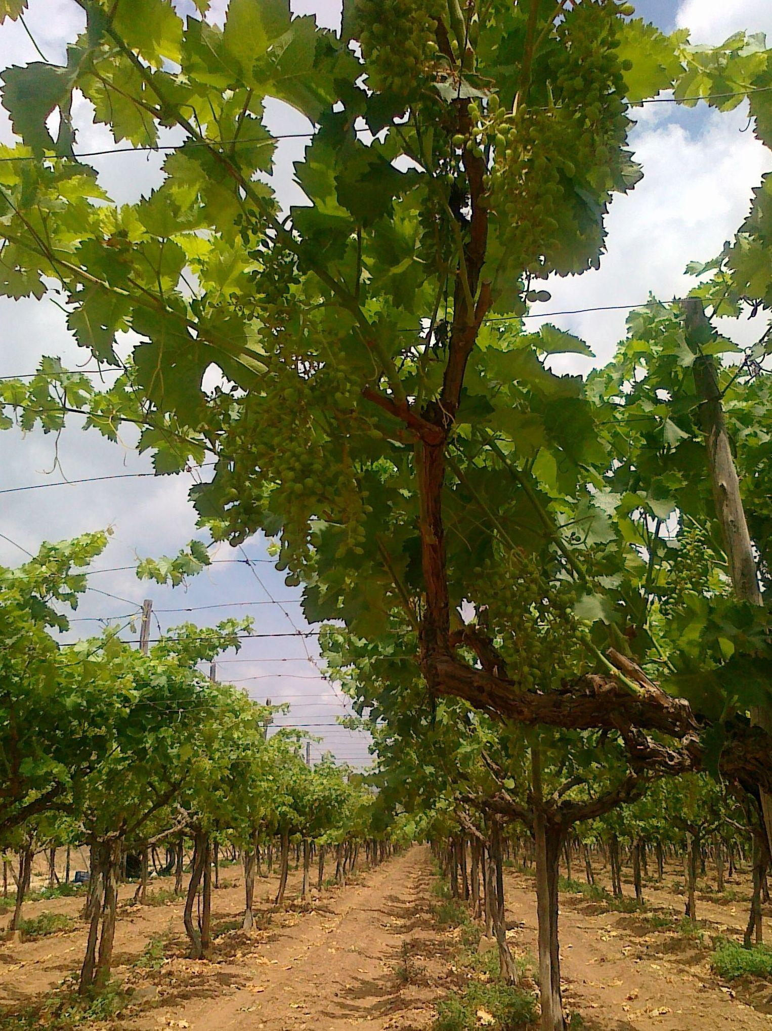 Picture 77 of Infraestructuras y trabajos agrícolas in La Murada – Orihuela   Mantenimiento y Estructuras Agrícolas Mateo e Hijo, S.L.
