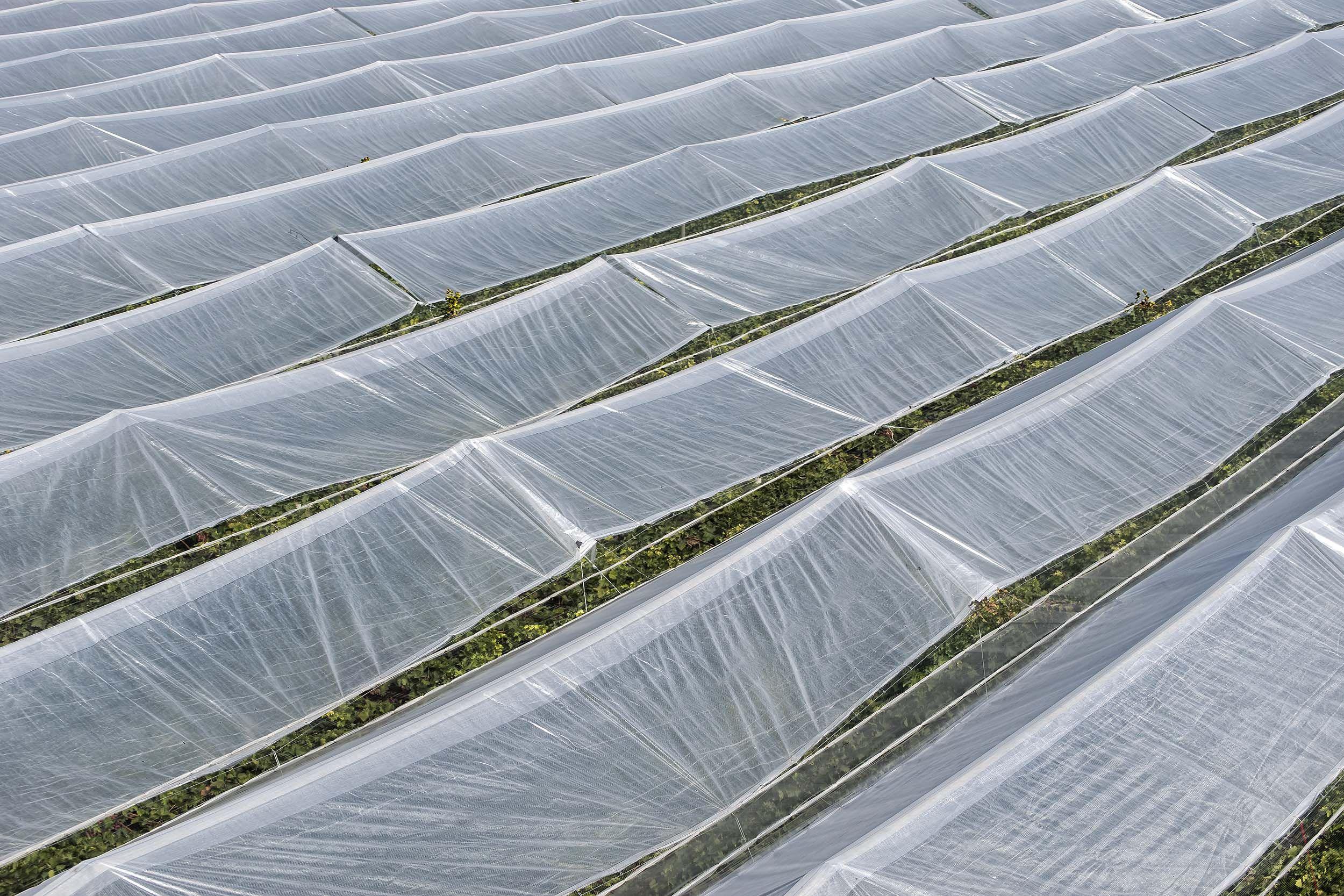 Empresa de referencia en construcción de invernaderos
