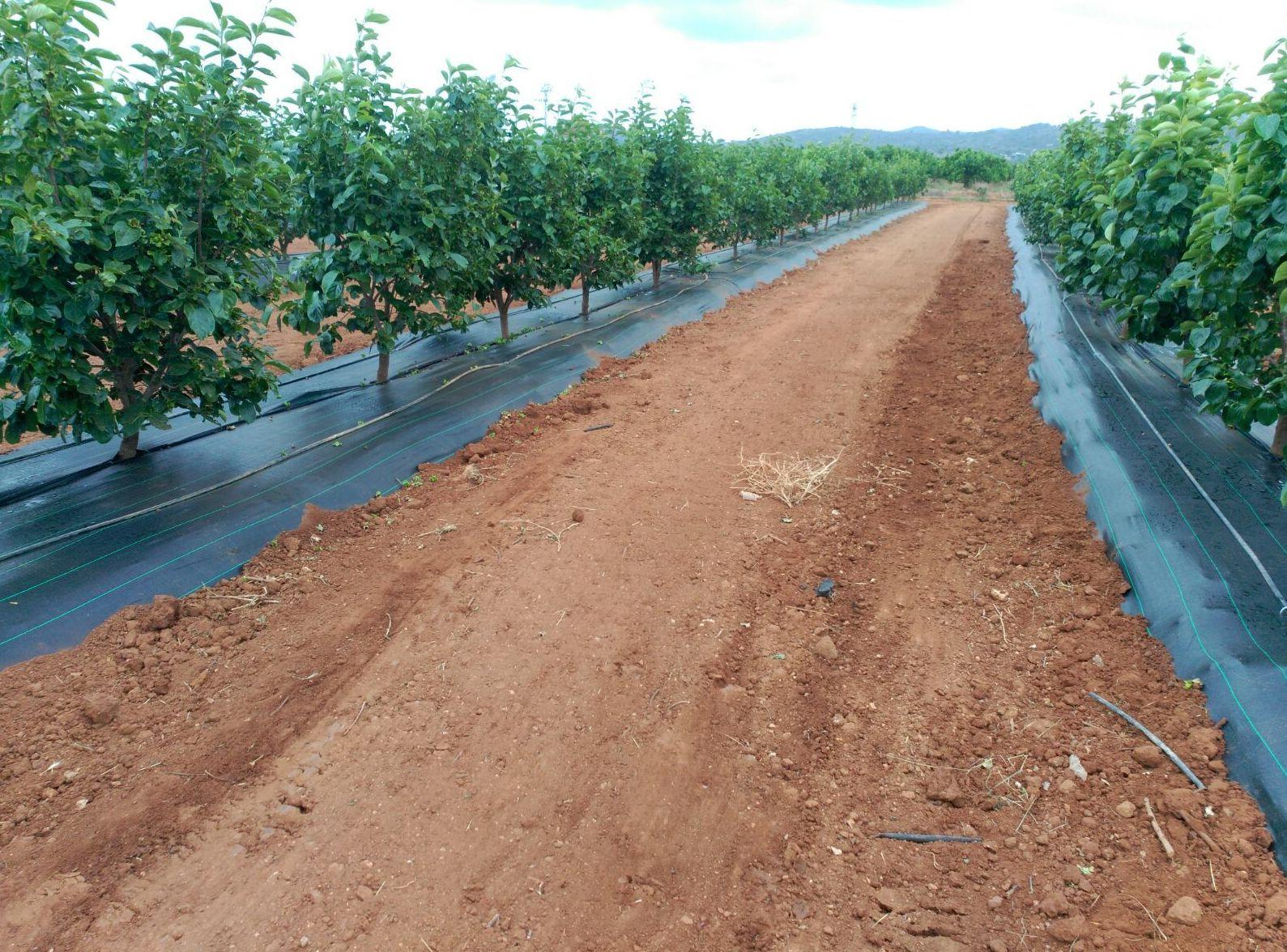 Foto 55 de Infraestructuras y trabajos agrícolas en La Murada – Orihuela | Mantenimiento y Estructuras Agrícolas Mateo e Hijo, S.L.
