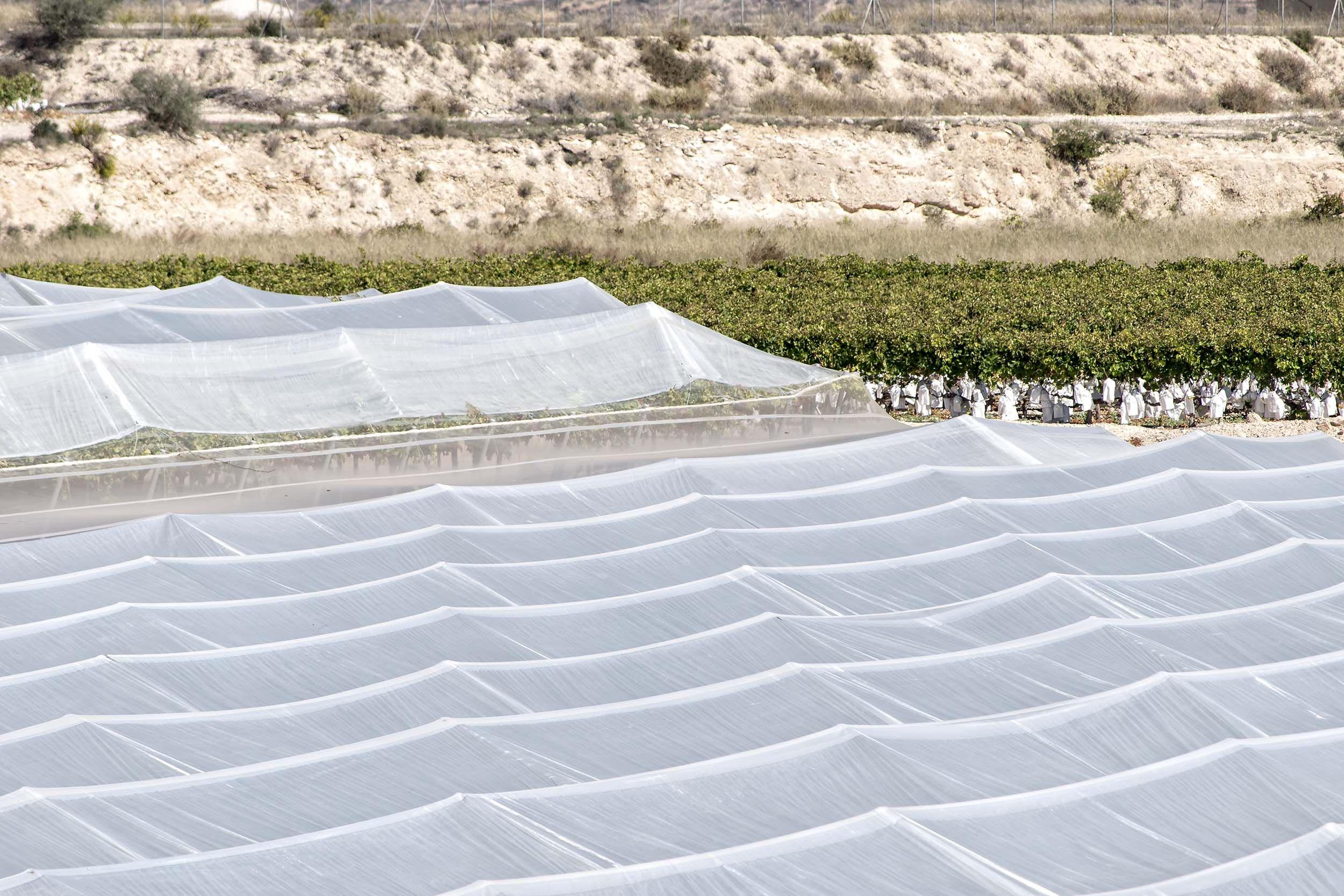 Construcción de invernaderos en Alicante