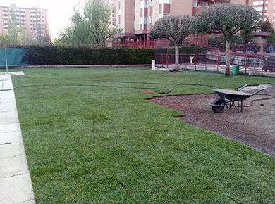 Mantenimiento de jardines en Valladolid