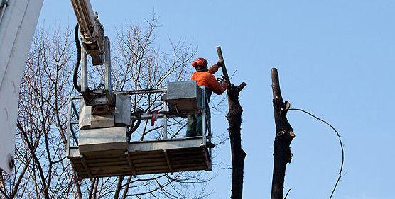 Tala y poda de árboles: Servicios de Jesús Jardinería y Limpiezas