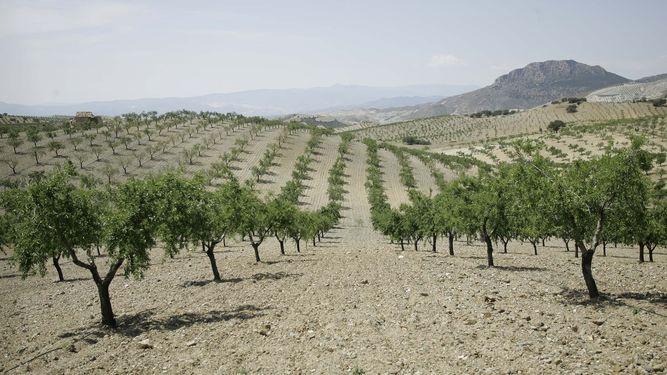 Sistemas de riego agricola en Cádiz