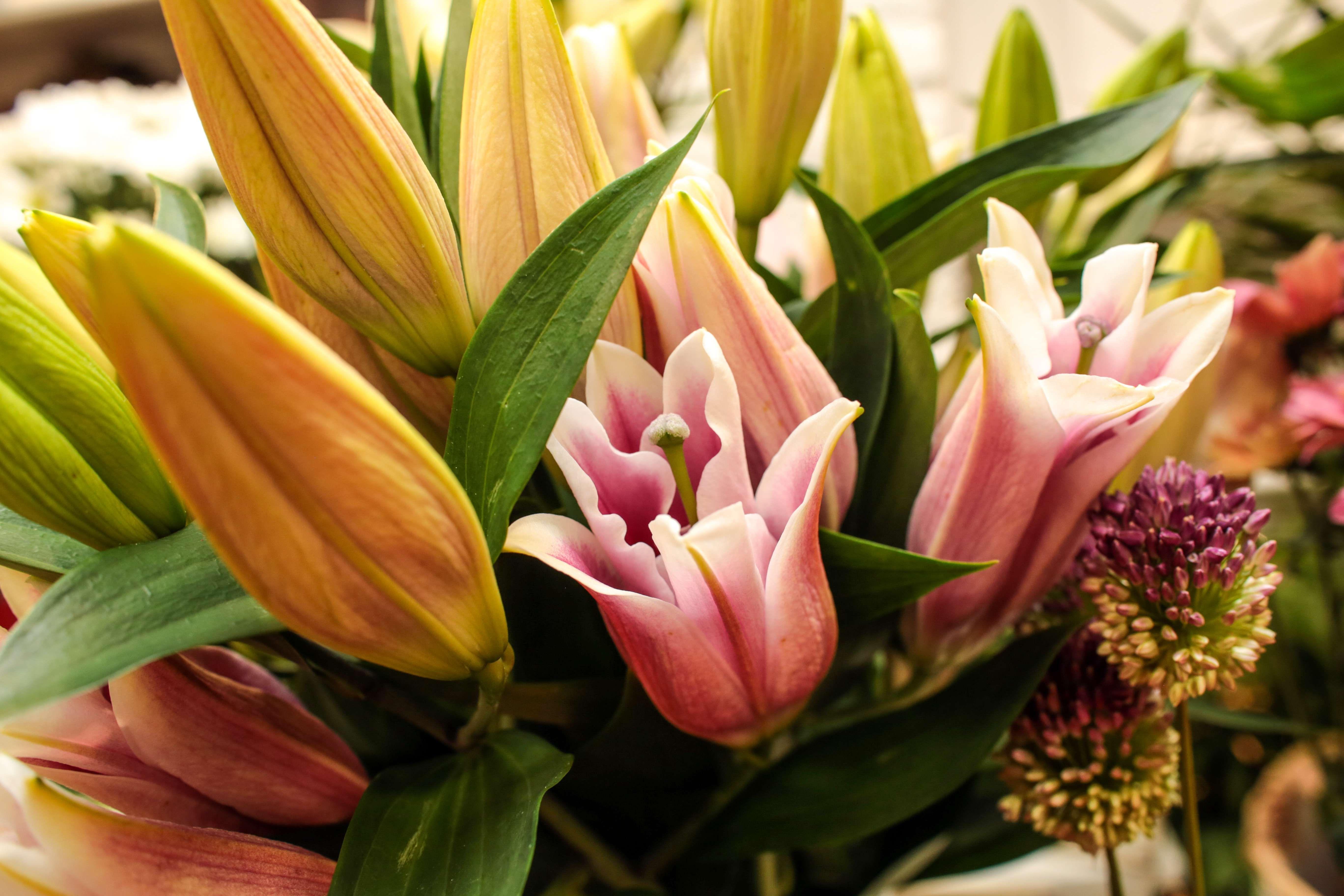 Venta de flores en Tafalla