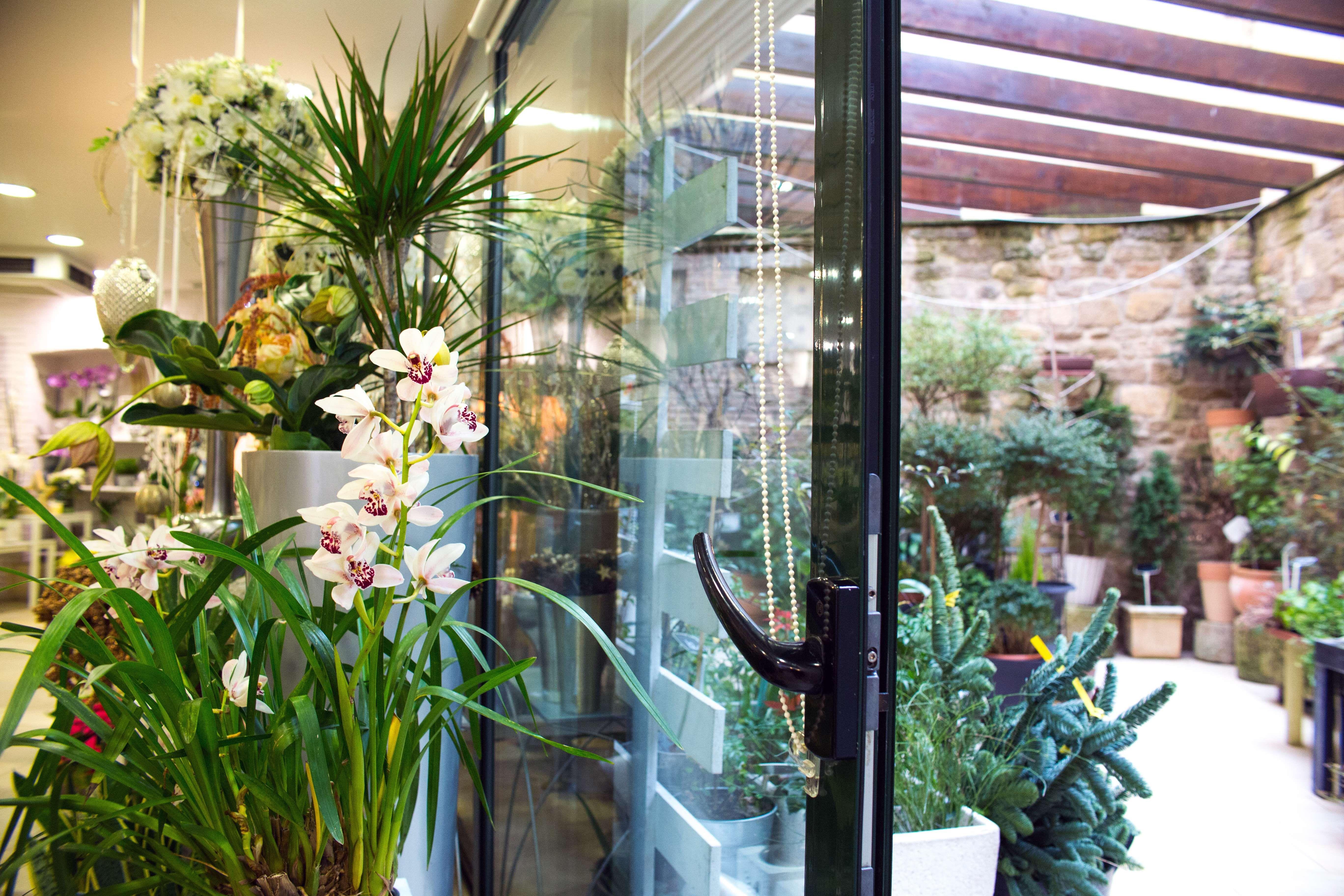 Tienda de flores y plantas en Tafalla