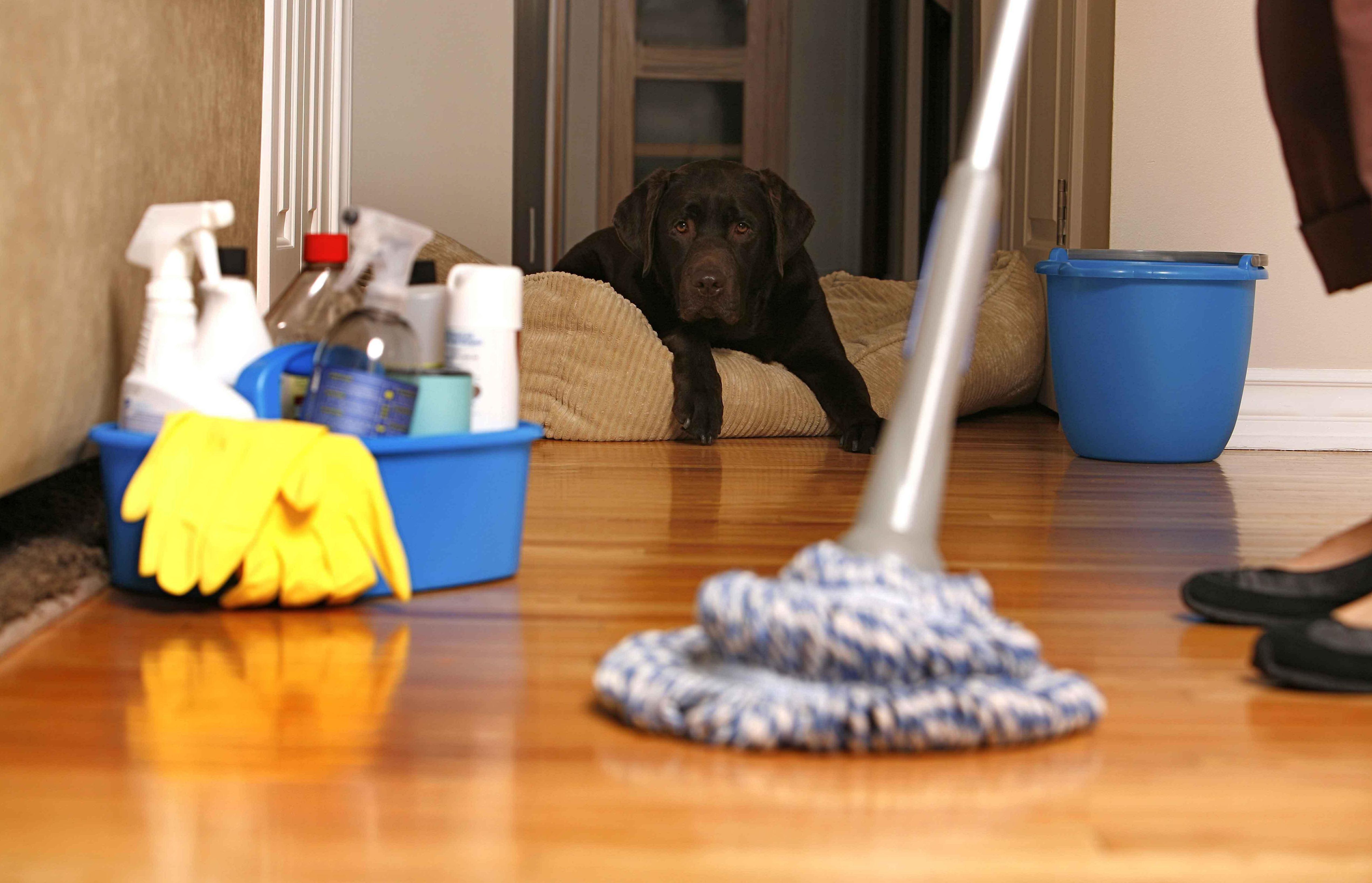 limpiezas de comunidades torrijos