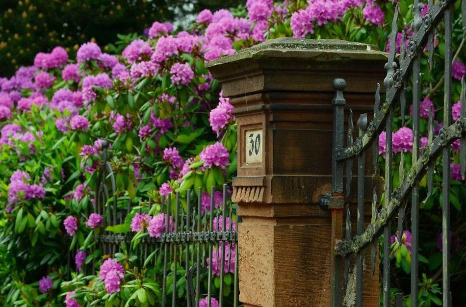 Diseño de jardines: Catálogo de Salvia Jardinería